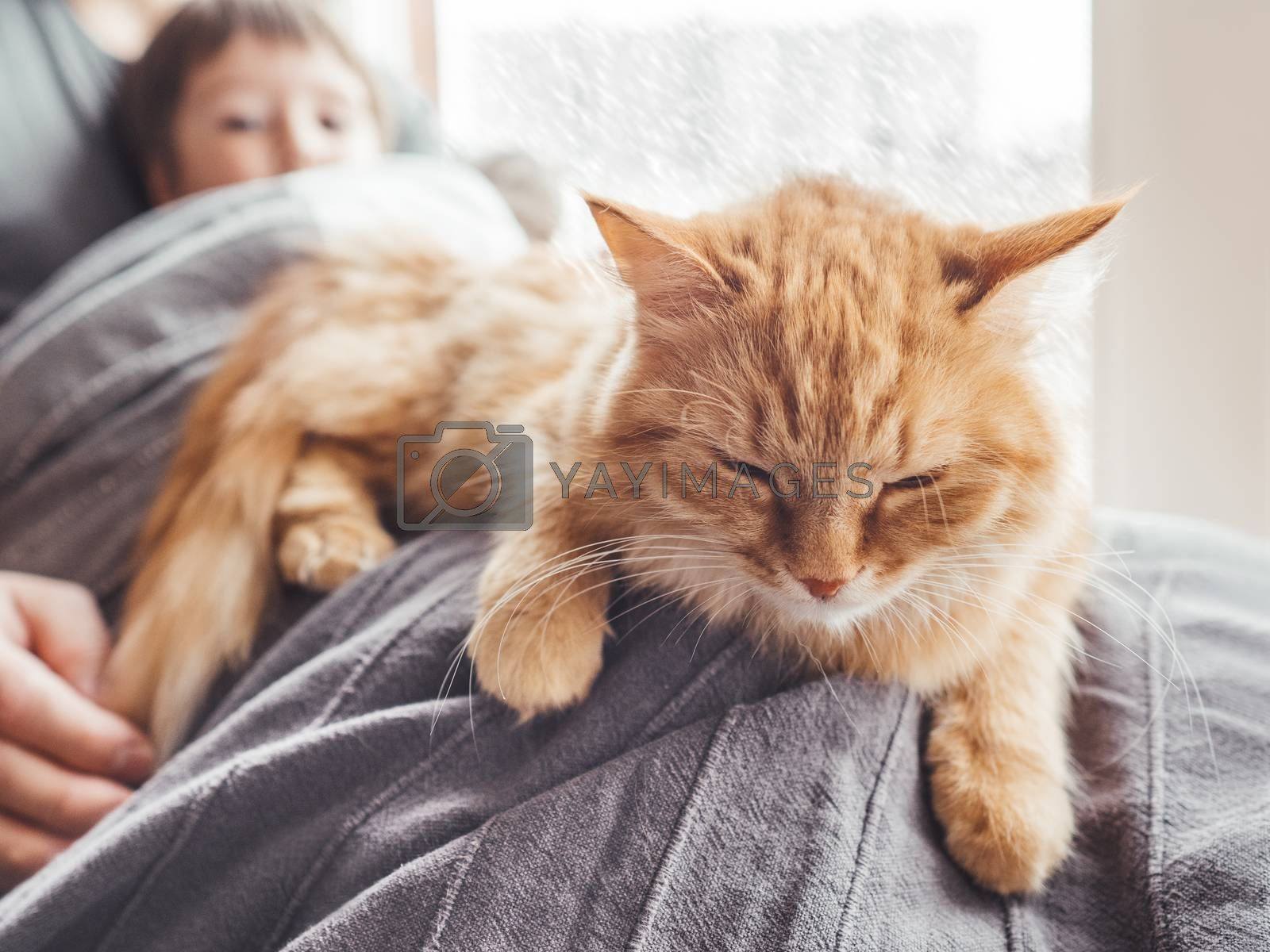 Father, son and they's cute ginger cat sit on window sill. Family relax under blanket. Man, toddler boy and fluffy pet at cozy home while snow is falling outside.