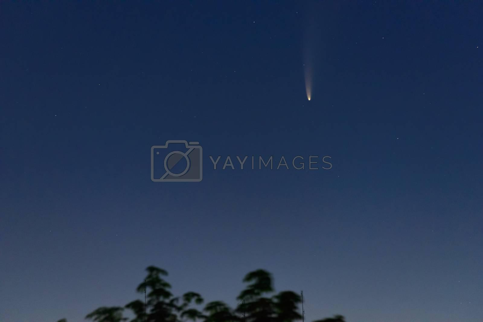Comet C/2020 F3 (NEOWISE) in early morning sky over tree, Zaporizhzhia, Ukraine, 12 July 2020. Credit: Maksym Protsenko/Alamy