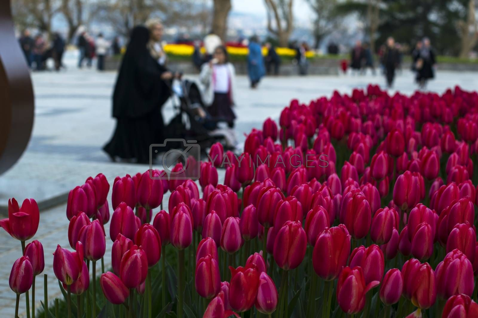 People and tulips.  Photo taken on 23rd April 2019, İstanbul, Turkey