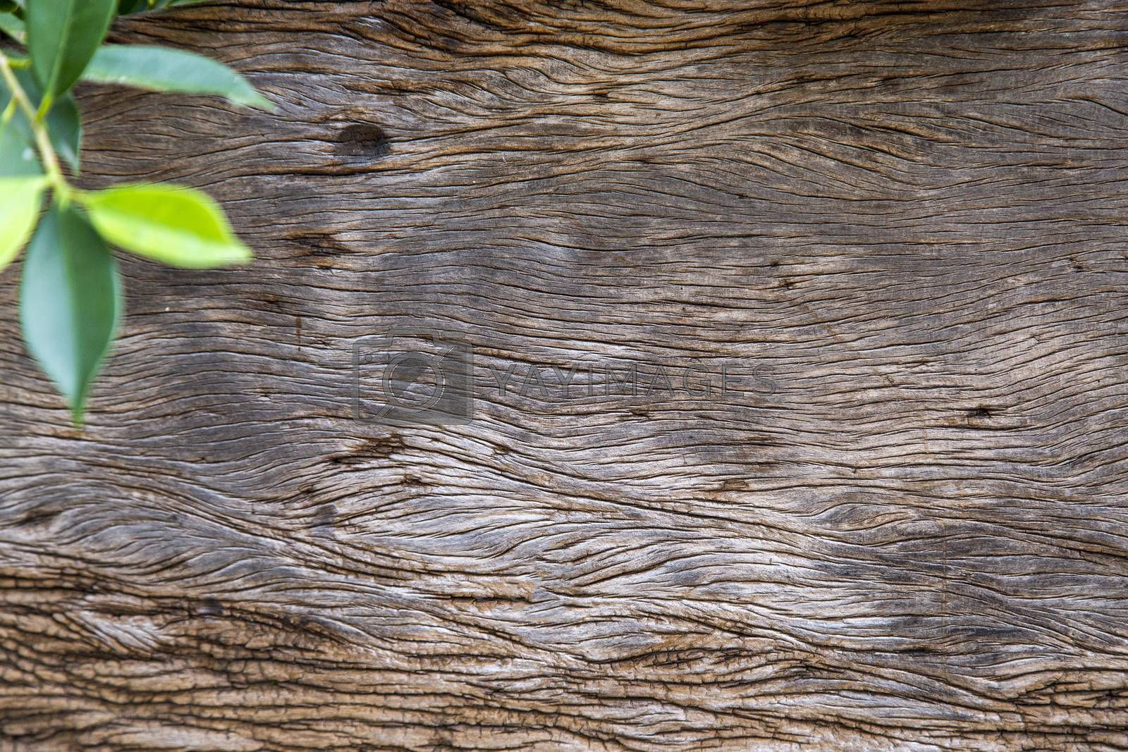 Background of wooden board with green leaf