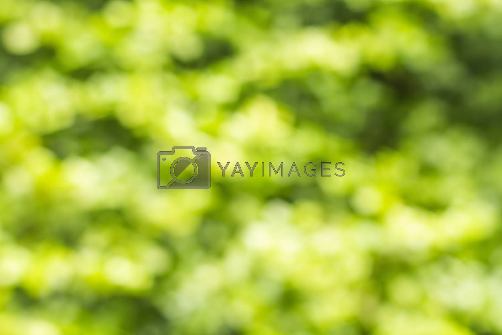Abstract blur of nature with green