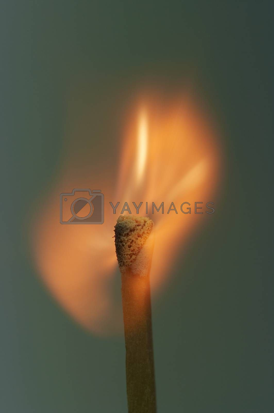 close-up of a burning match