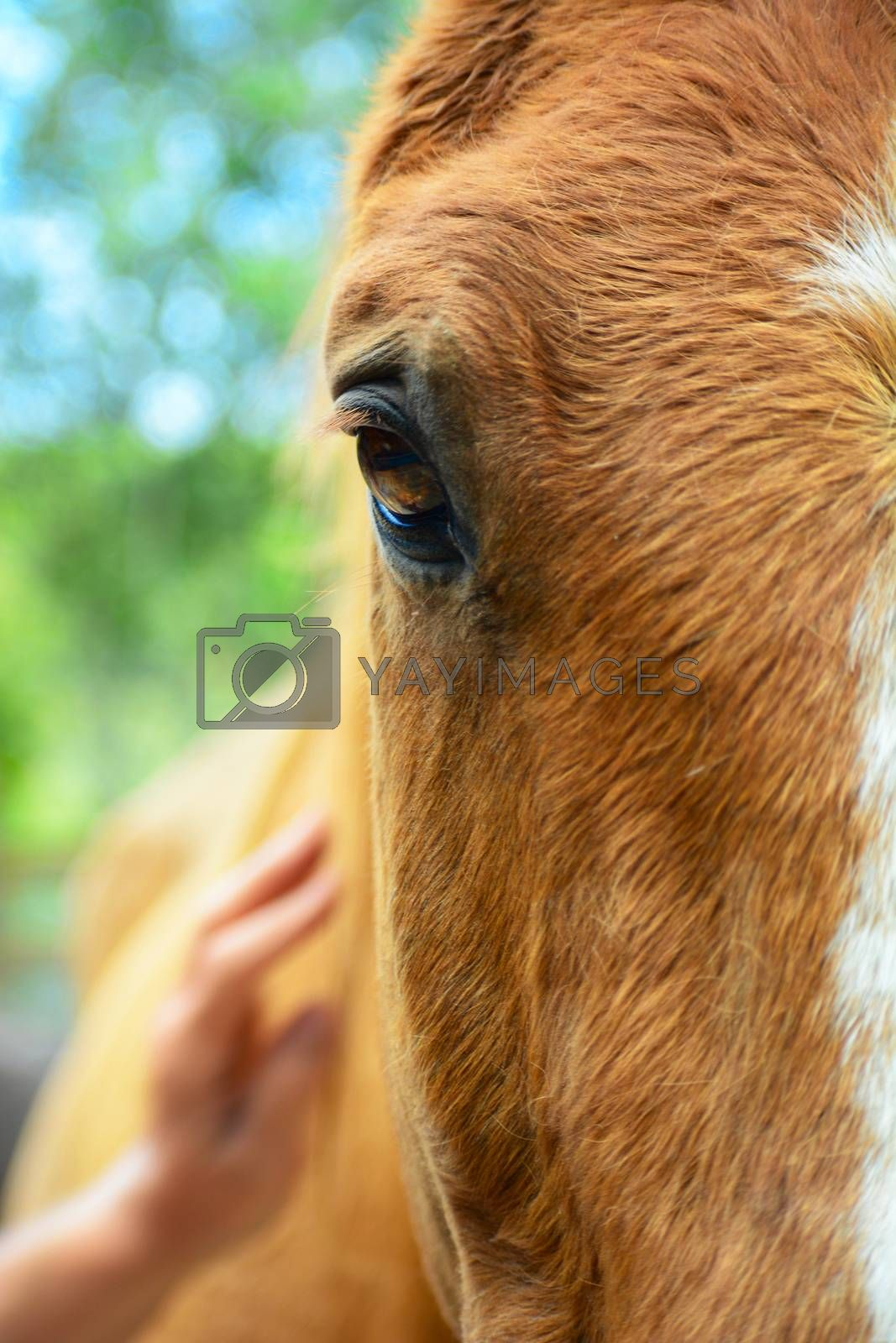 Portrait of a horse, close-up.