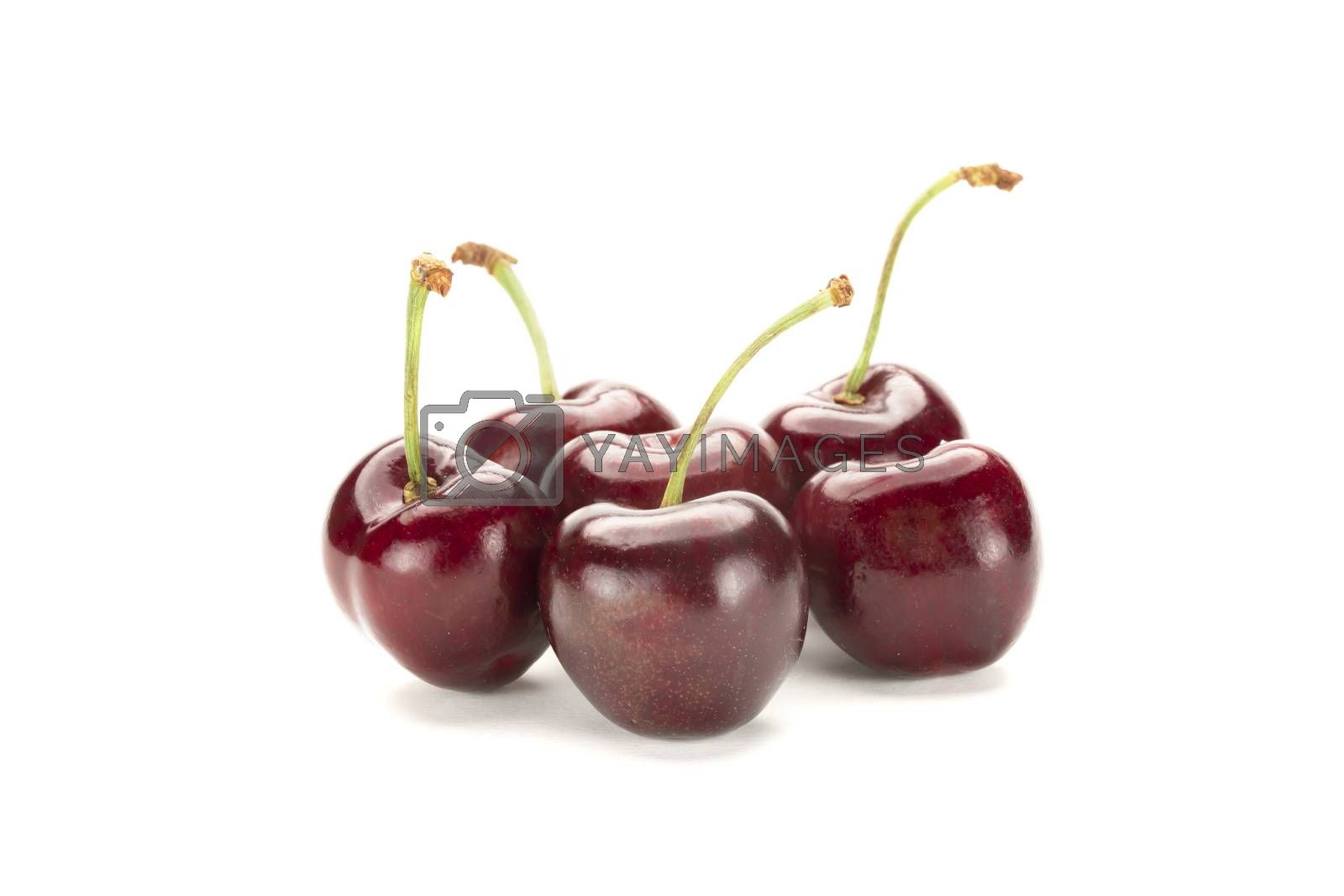 A bunch of ripe red cherries. Isolated on white background.