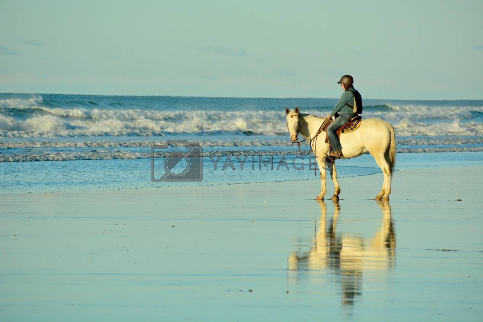 Holidays at the sea; winter time in New Zealand; riding a horse at a seashore