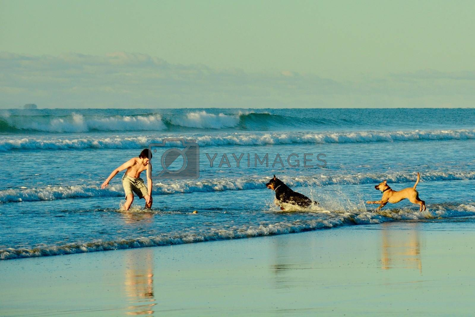 Holidays at the sea; winter time in New Zealand; wonderful pastime at the seashore; man and dogs