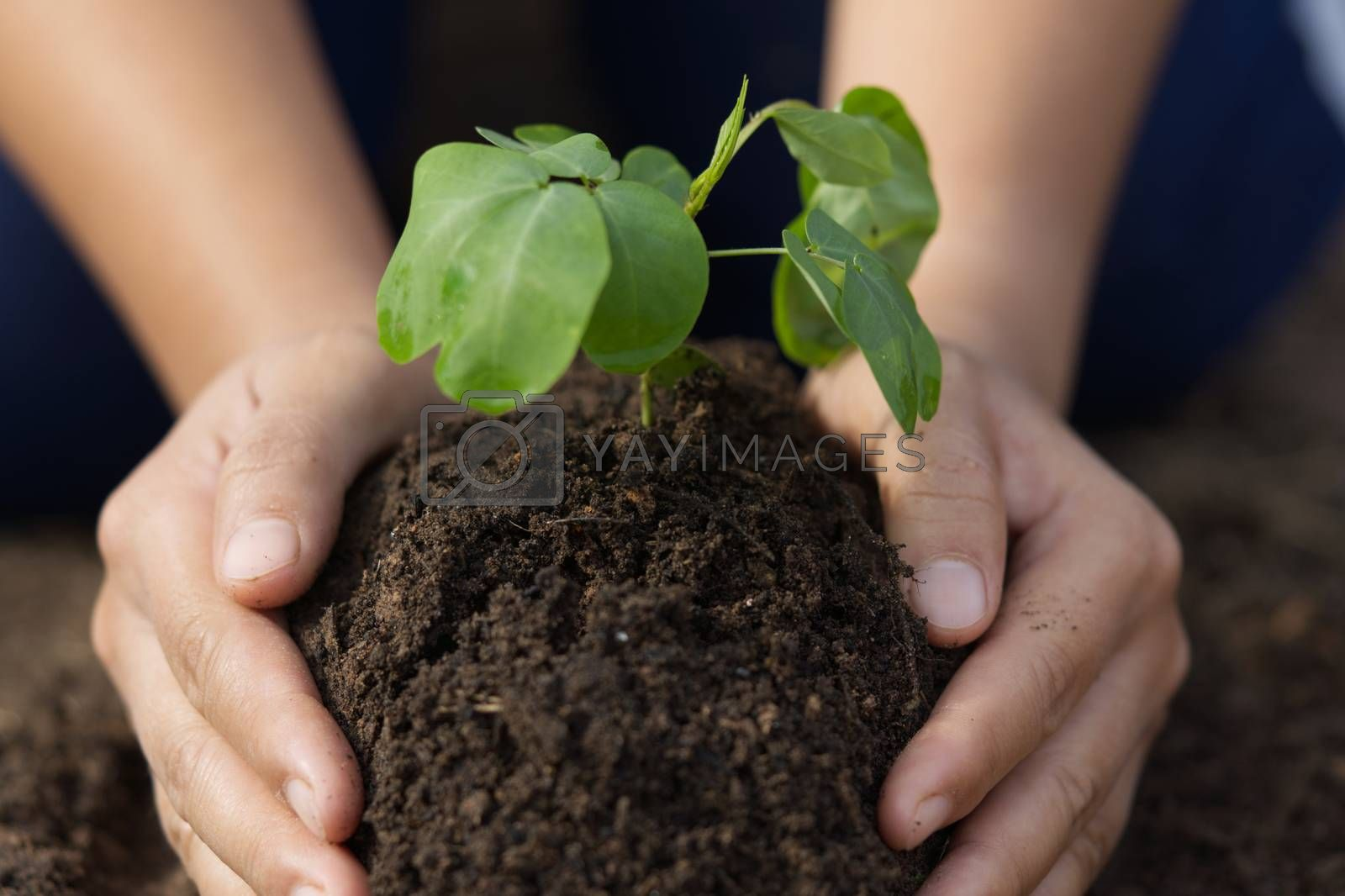 Planting trees with 2 hands.