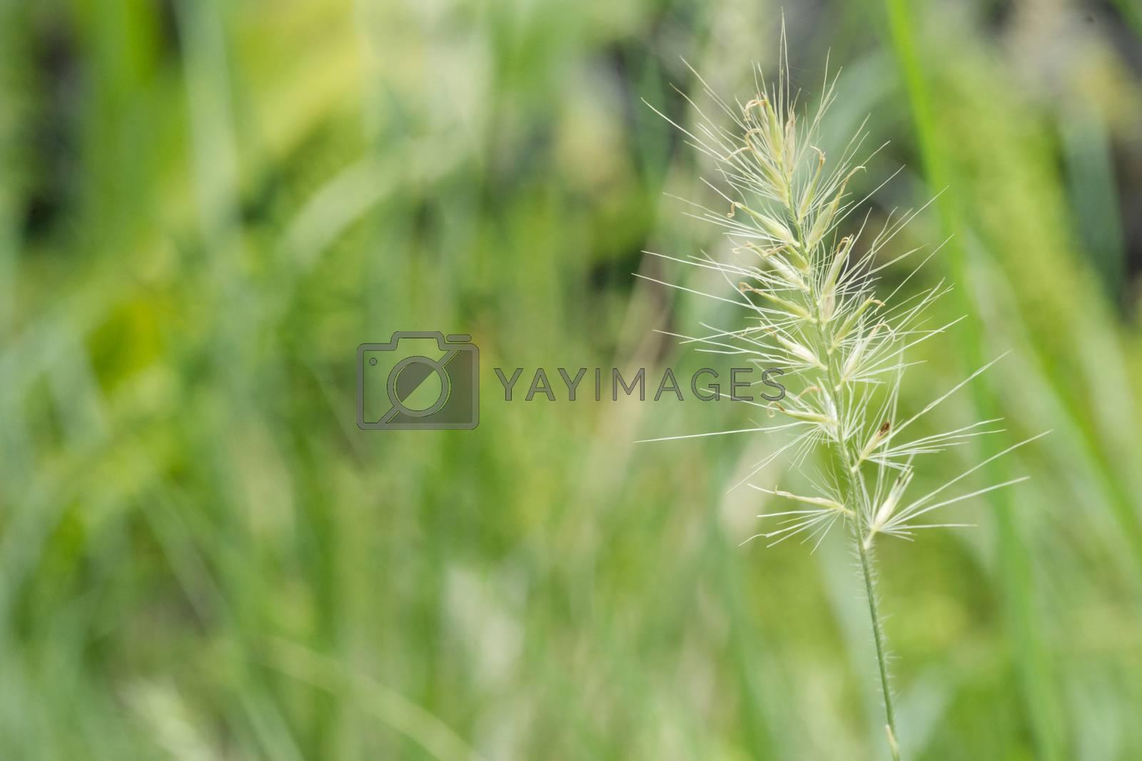 Morning glory green grass garden background image.