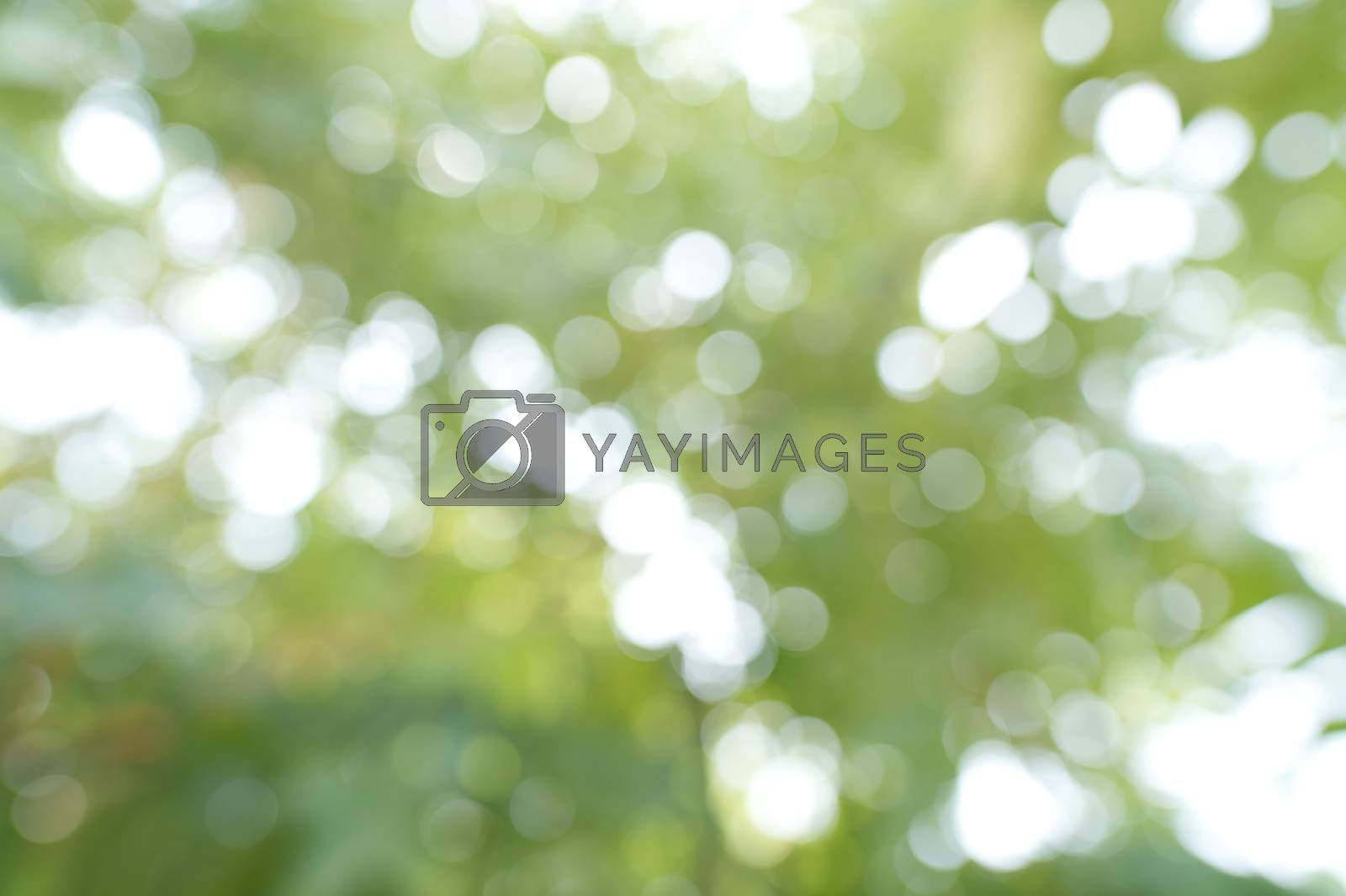Abstract, the green bokeh background from a tree in a forest garden represents a fresh, bright