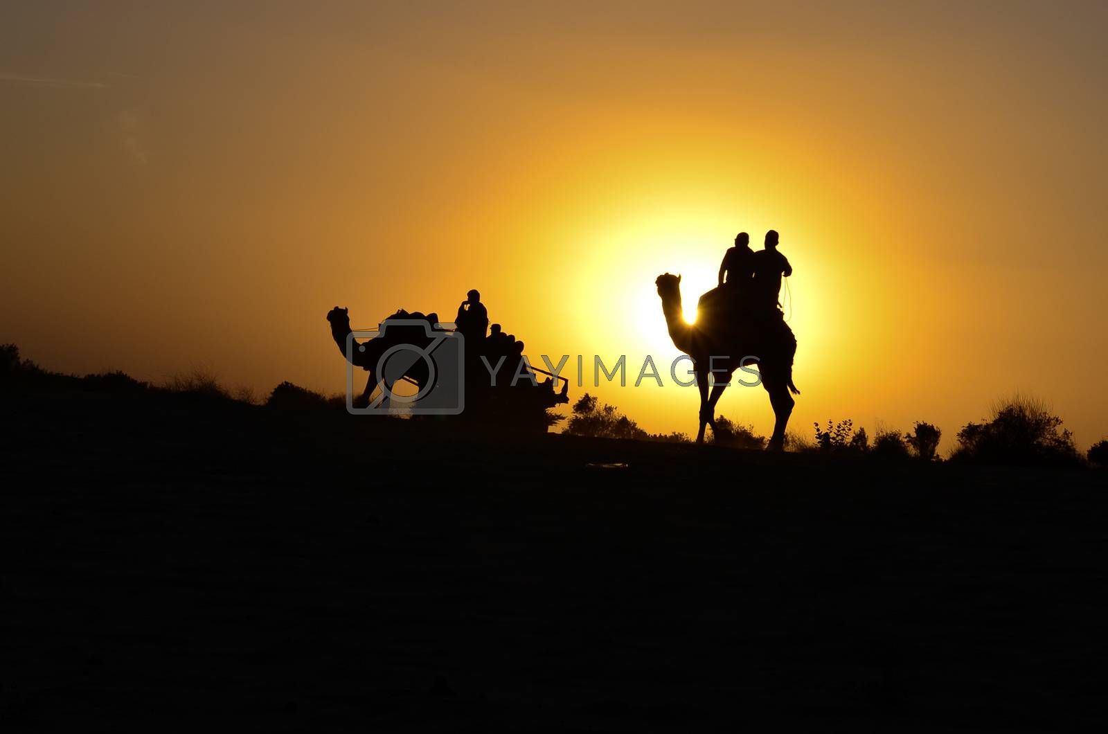 Silhouette of a camel cart and camel carrying tourists in Sam sand dunes, Jaisalmer. Located in the midst of the Thar Desert, these sand dunes are amongst the most famous ones in Rajasthan, India