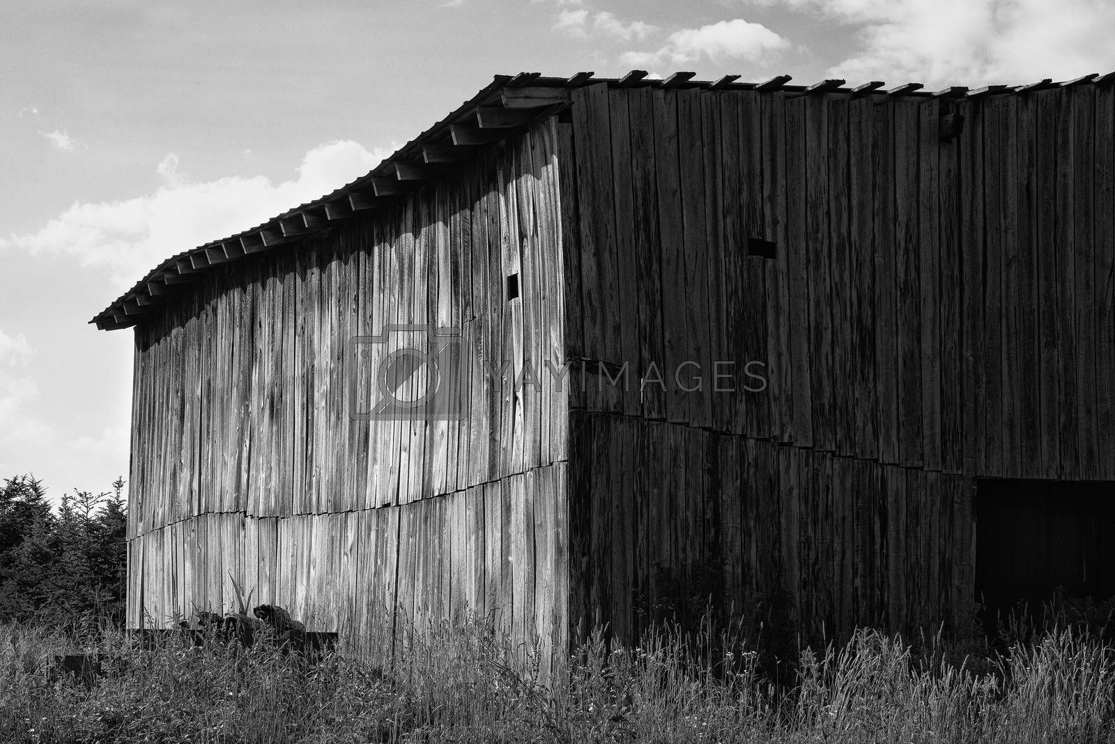 Monochrome view of old wooden barn on former Christmas tree farm.