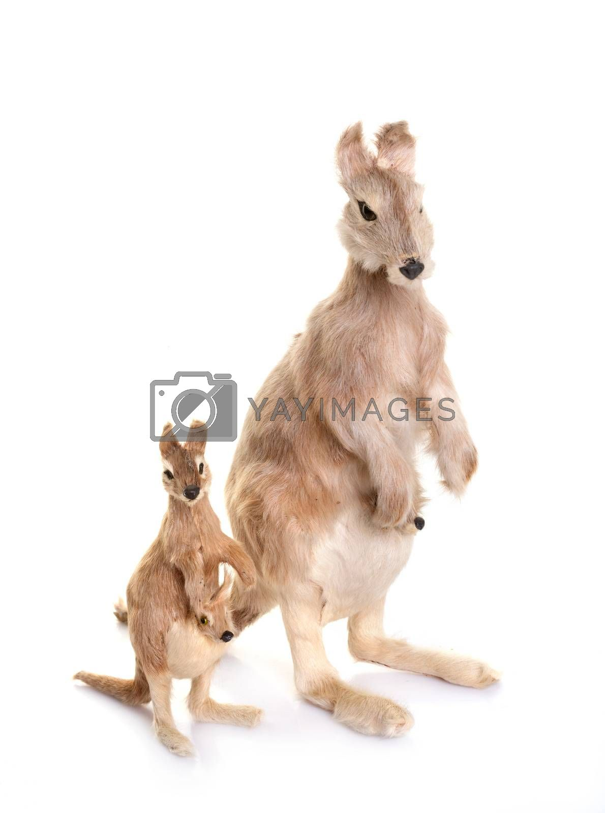 animal trinket in front of white background