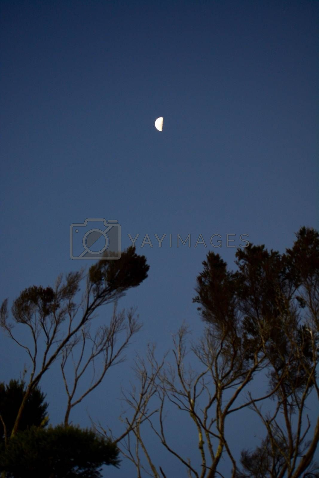 Sky in the evening or at night; silhouettes of trees; half-moon above the trees; sky in the late evening