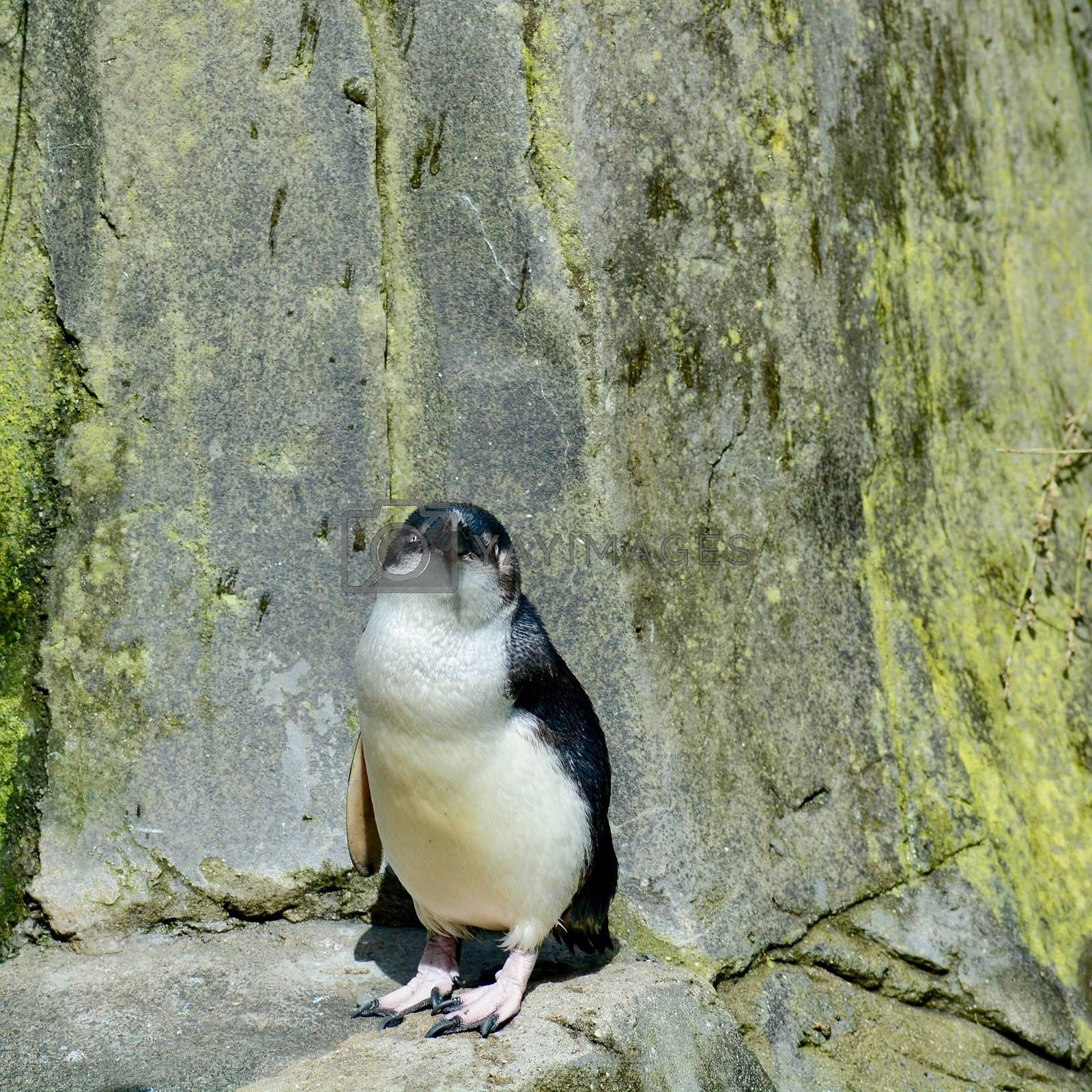 Penguins resqued from fishing nets, with lost wings.