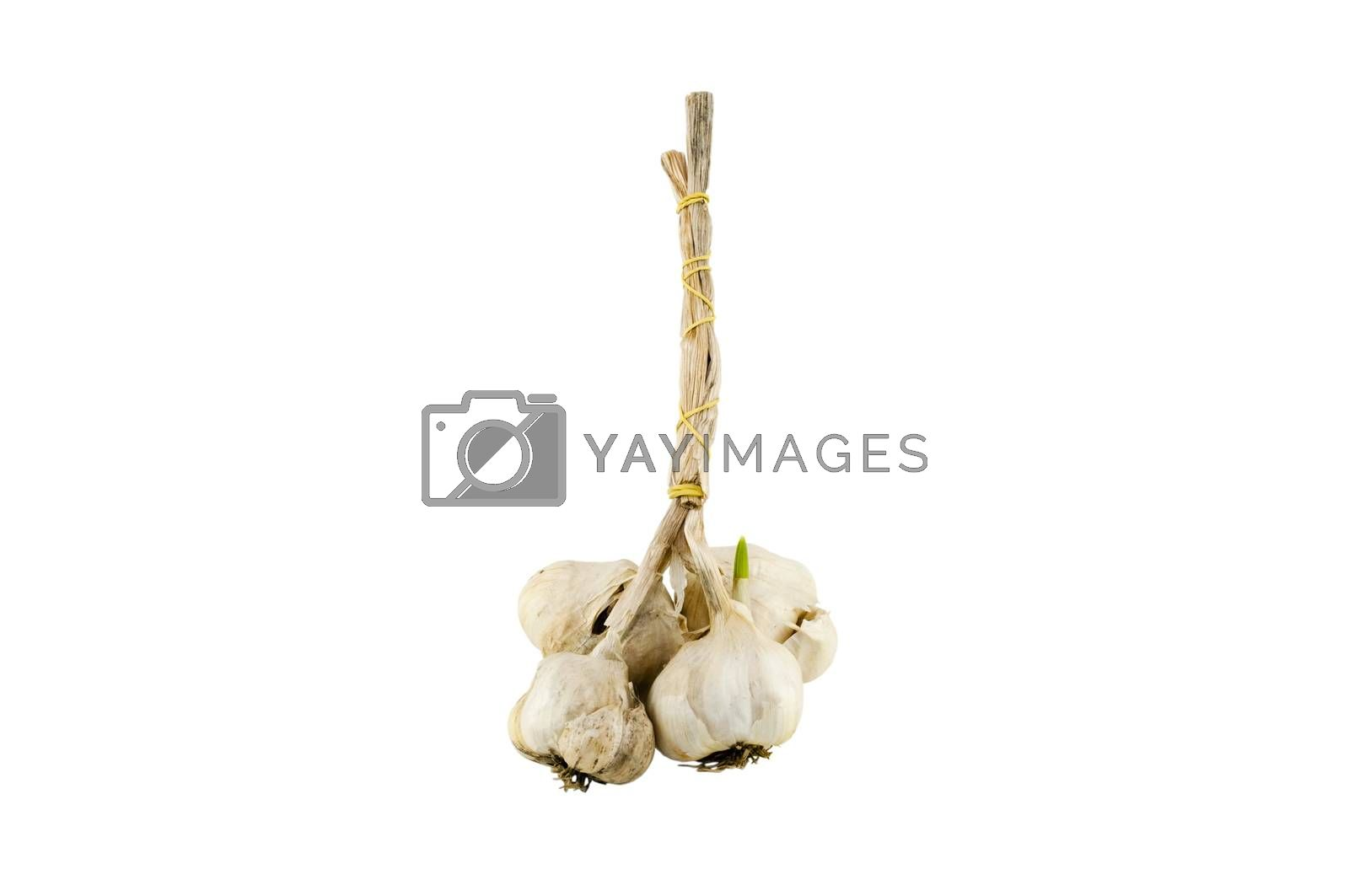bundle of garlic on a white background