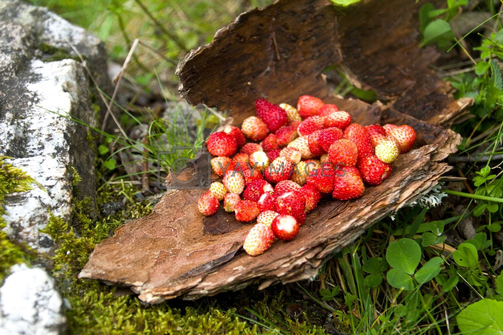 a handfull of wild strawberries placed on a tree crust