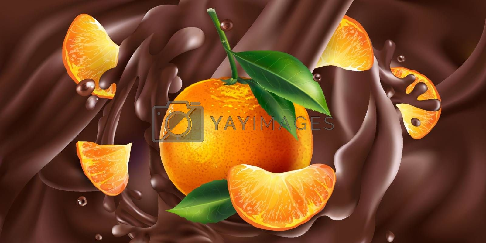 Fresh mandarins are added to liquid chocolate. Realistic vector illustration.