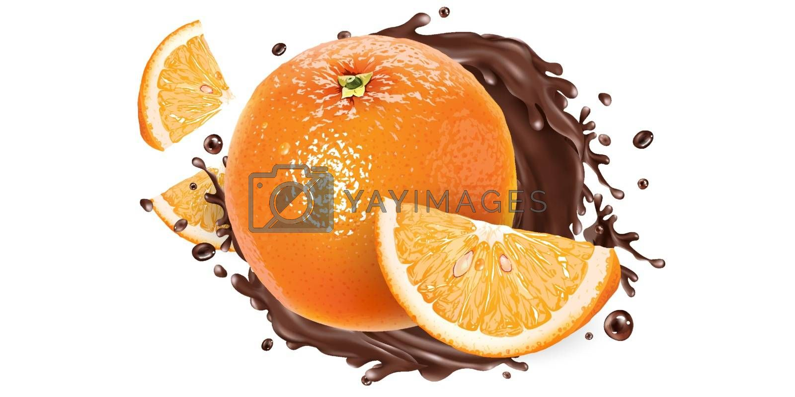 Fresh oranges and a splash of liquid chocolate on a white background. Realistic vector illustration.