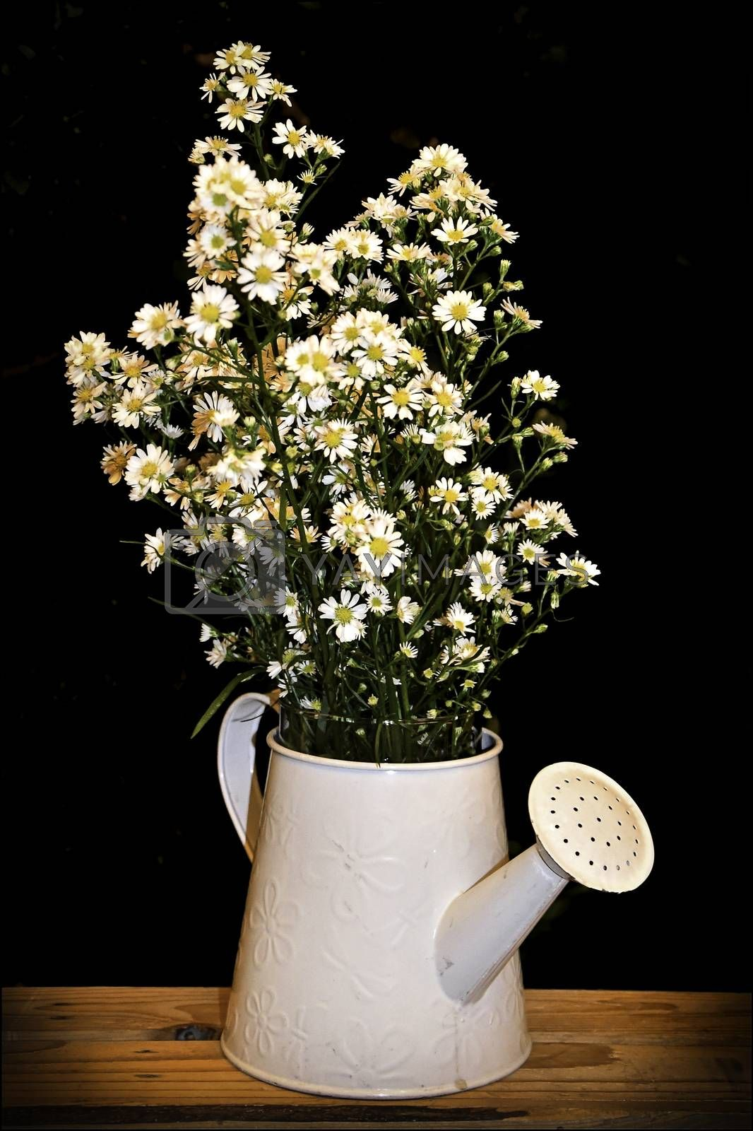A bouquet of wild camomile and daisies in a white enamelled watering can. Reminiscent of a rustic country cottage garden scene.