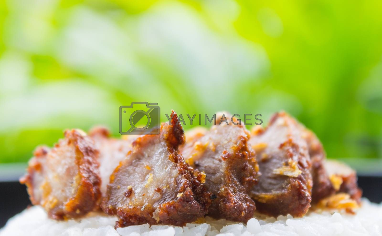 Thai Food Fried Pork with Garlic and Rice on Natural Green Tree Background Thai Food. Delicious Fried Pork with Garlic Thai food style for food and drink category