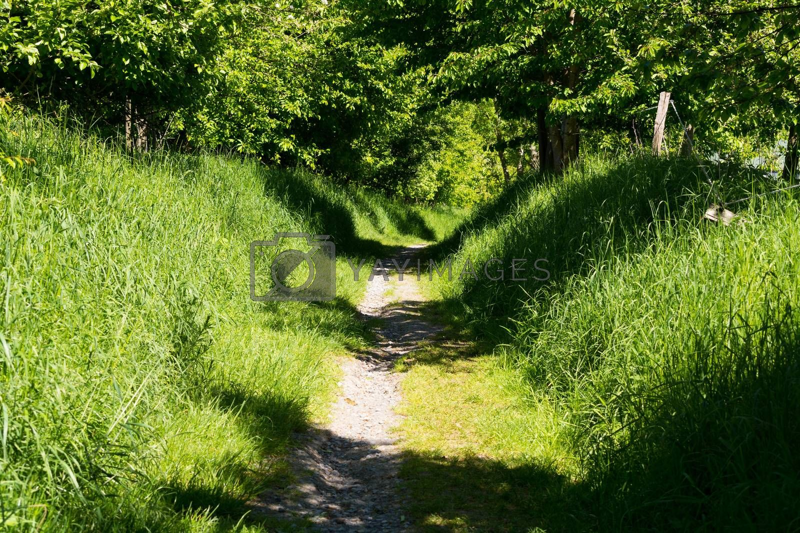 Fairytale forest landscape alley way outdoor space park nature landscape environment with path for walking among trees and sunbeams