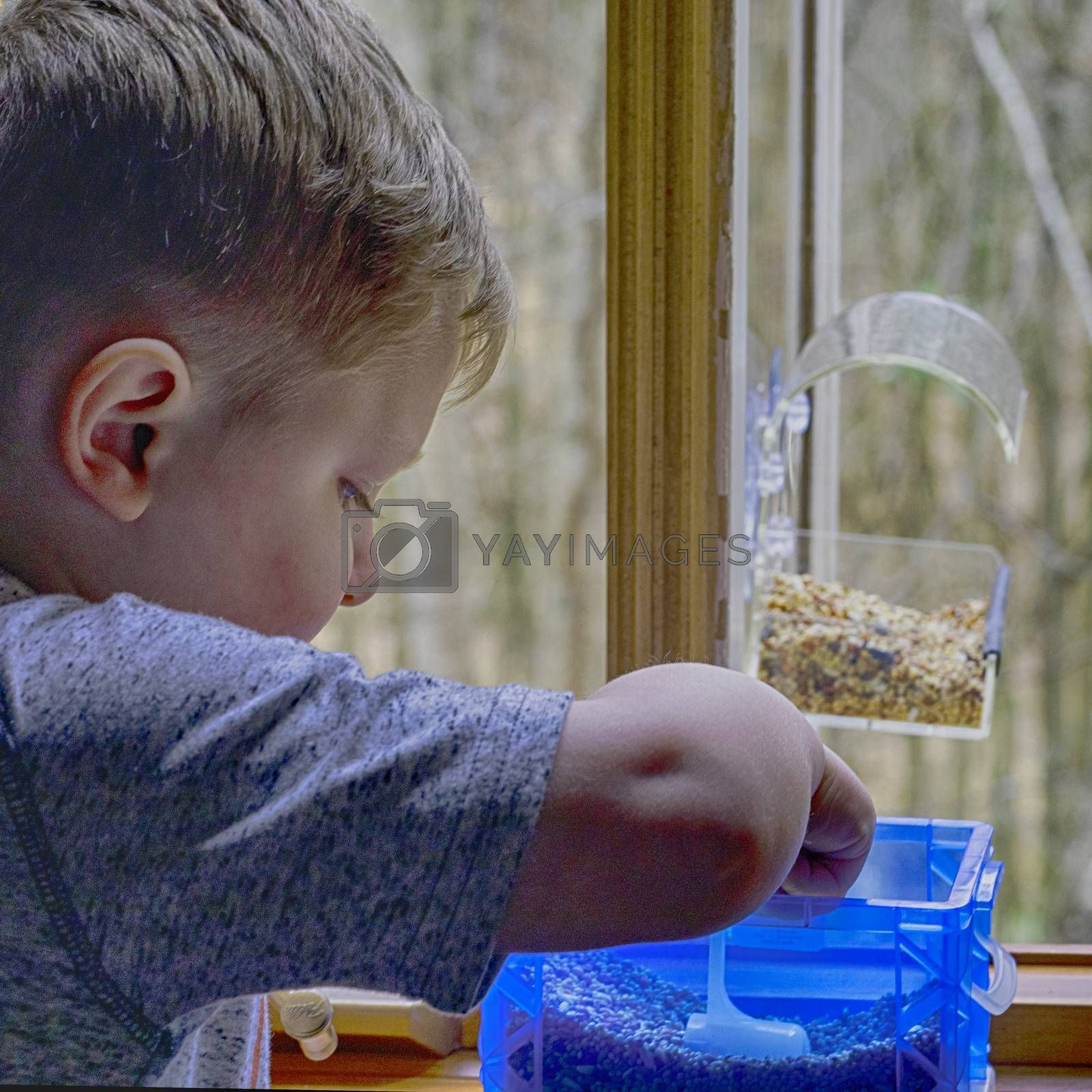Small boy sccops up bird seed to load into window-mounted feeder.