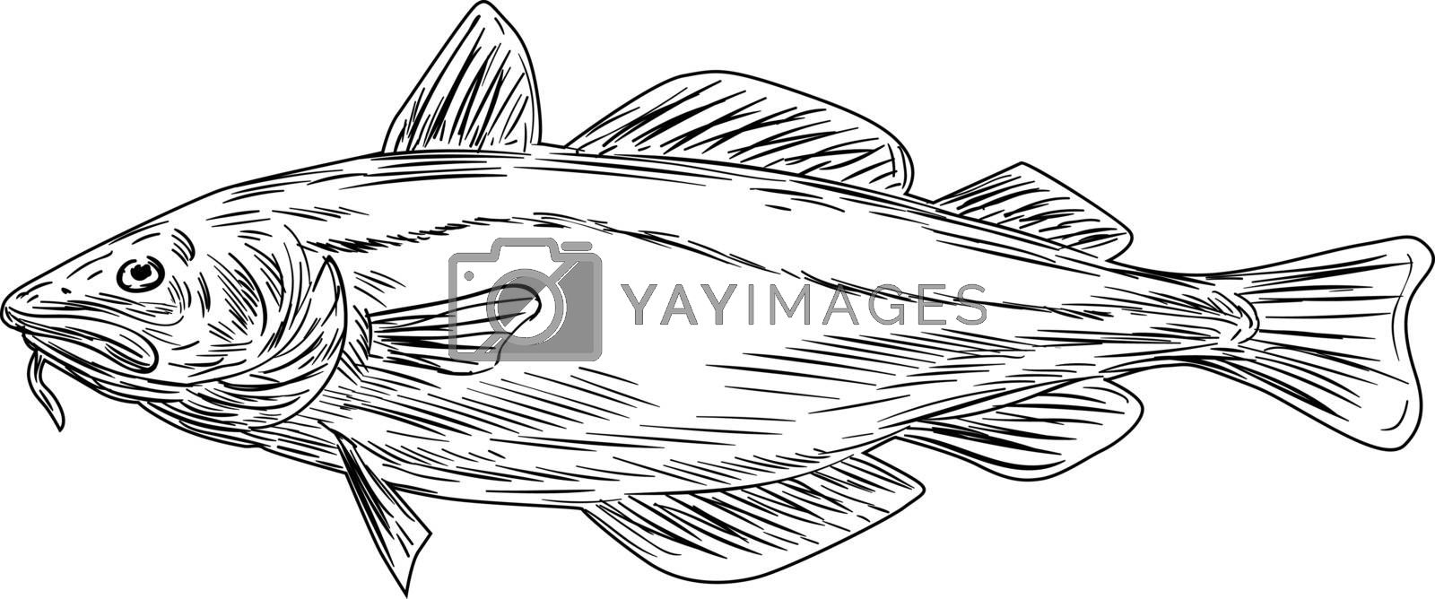 Black and white drawing illustration of an Atlantic cod, or Gadus morhua, a benthopelagic fish of the family Gadidae, also known as cod or codling viewed from the side set on isolated background.