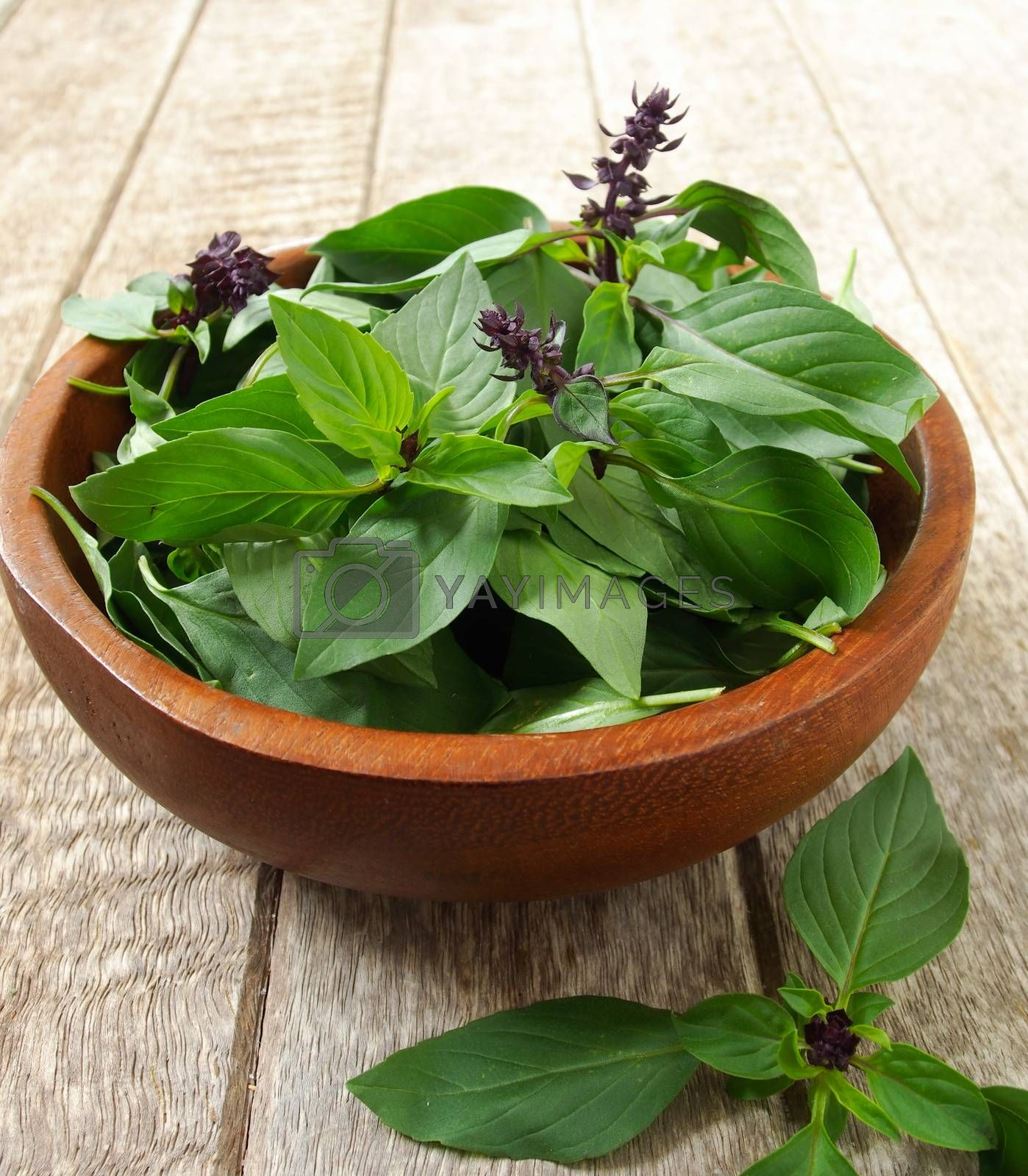 basil leaf in wooden bowl on table