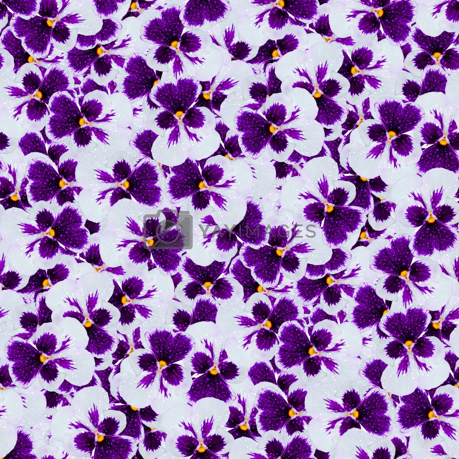 texture of a seamless pattern with colors, blue pansies decorative design elements
