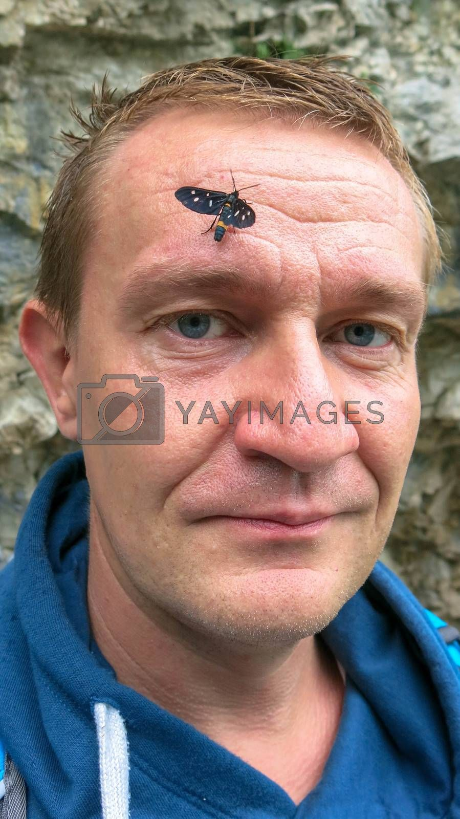 Black butterfly with white dots on the wings on the forehead of a man. Man with a butterfly on his head.
