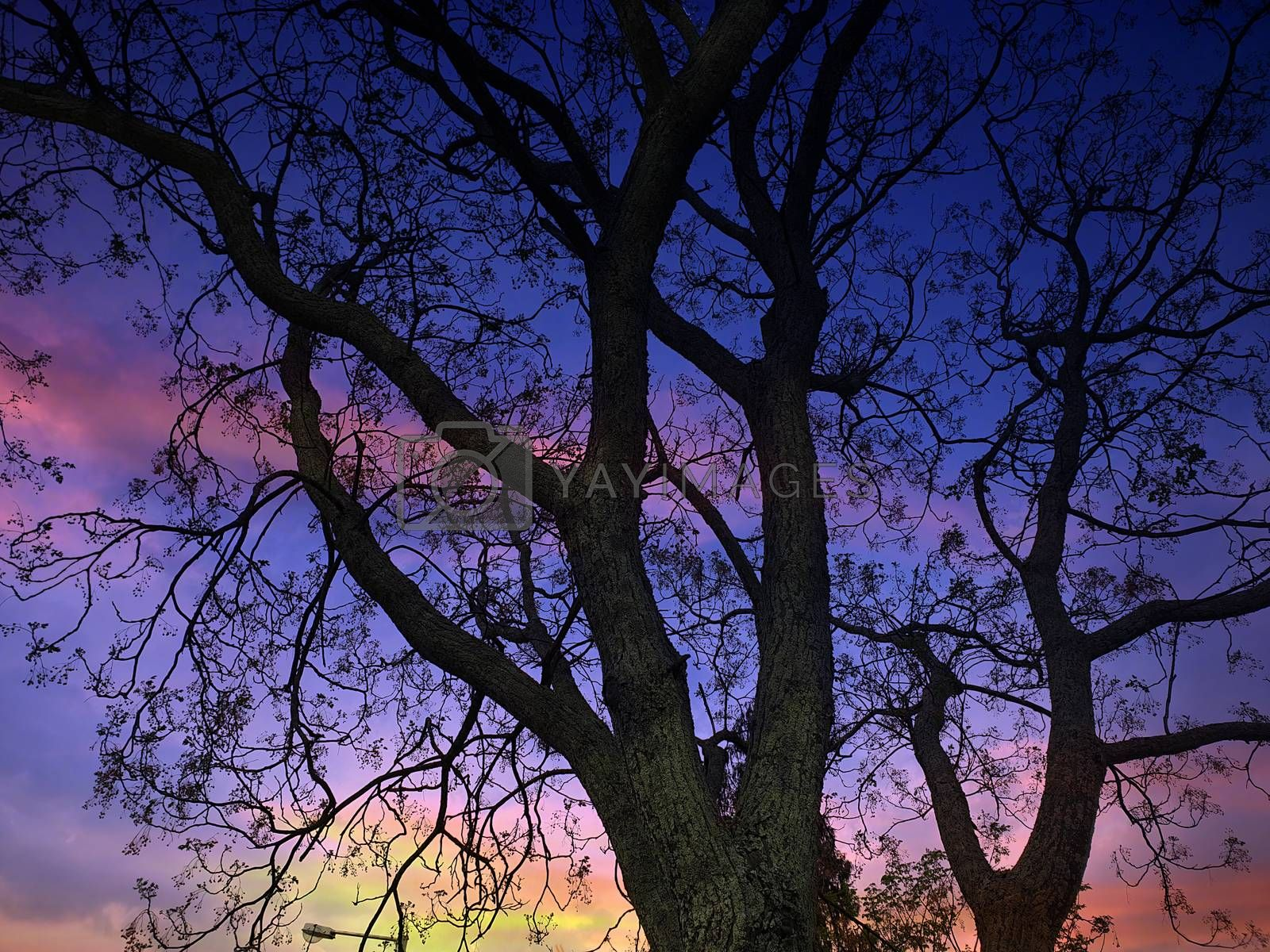 A beautiful tree in autumn against the backdrop of colorful dusky sky.