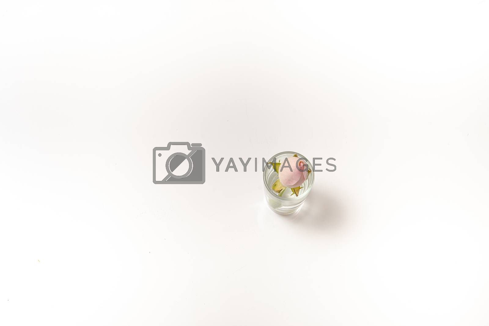 The small rose in transparent glass stack with water and copy space