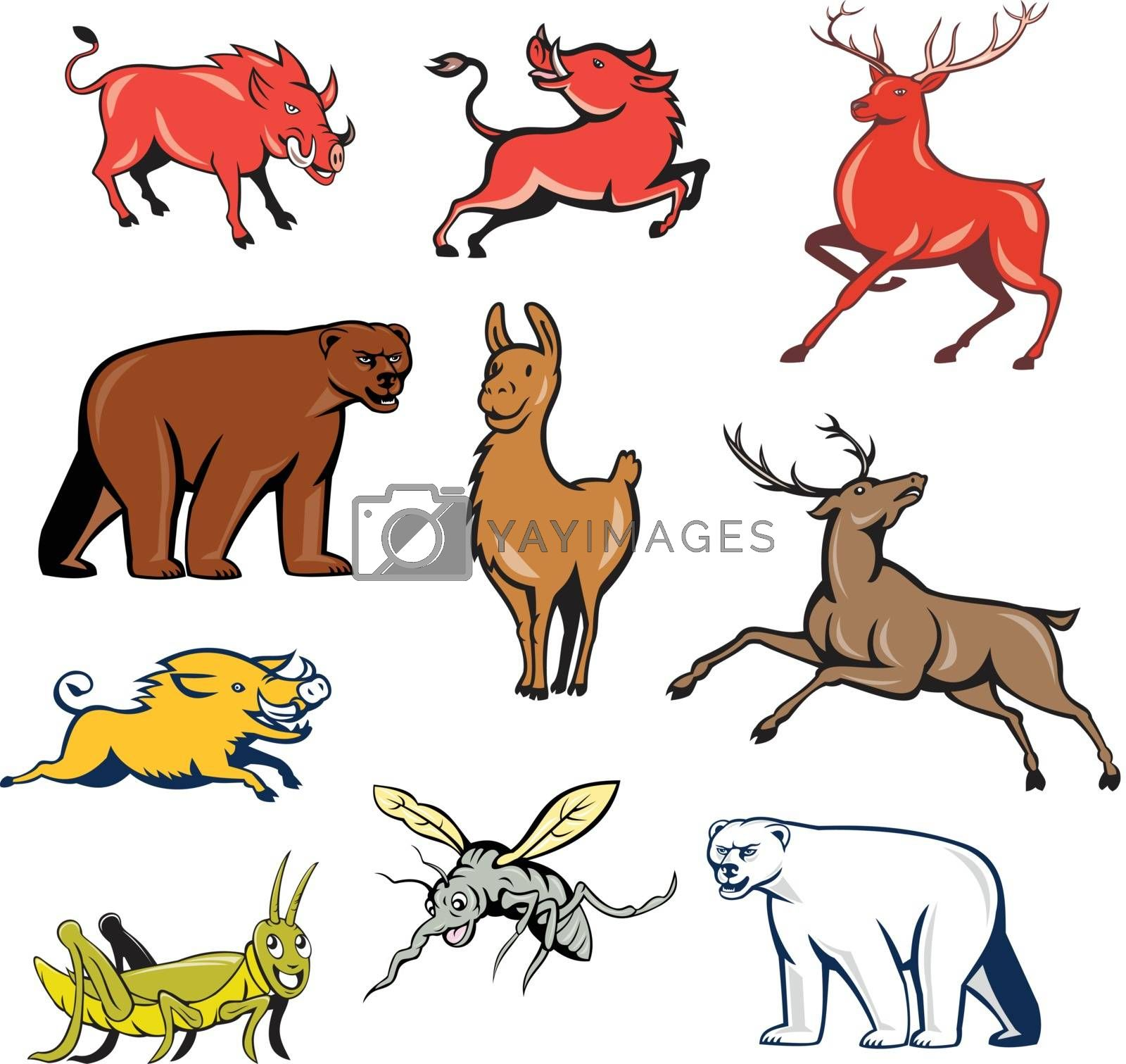 Set or collection of cartoon character mascot style illustration of wildilfe animals like wild boar, razorback, red deer, reindeer, llama, alpaca, bear, polar bear, grasshopper and mosquito on isolated white background.
