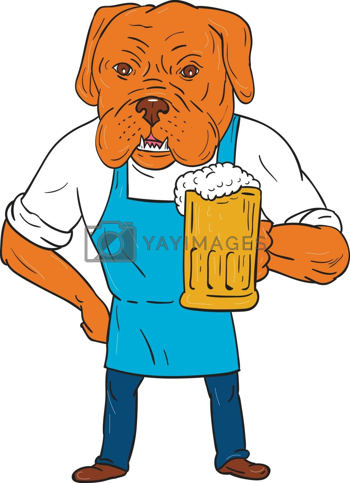 Illustration of a Dogue de Bordeaux, Bordeaux Mastiff, French Mastiff or Bordeaux dog, a large French Mastiff breed one of the most ancient French dog breeds brewer wearing apron holding beer mug with one hand on hip viewed from front set on isolated white background done in cartoon style.