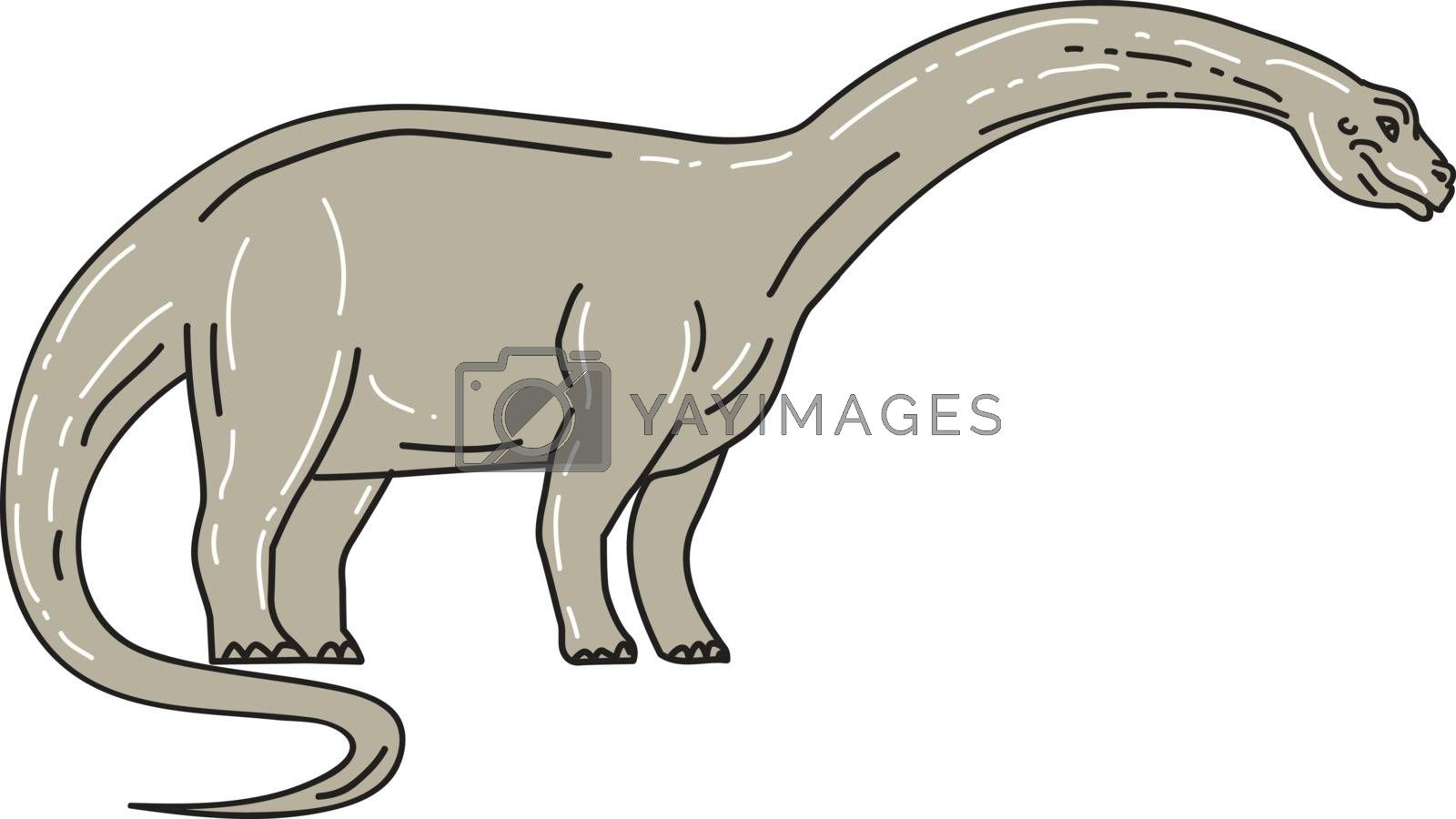 """Illustration of a Brontosaurus meaning """"thunder lizard, a genus of gigantic quadruped sauropod dinosaurs that lived in the late Jurrasic epoch looking down viewed from the side set on isolated white background."""