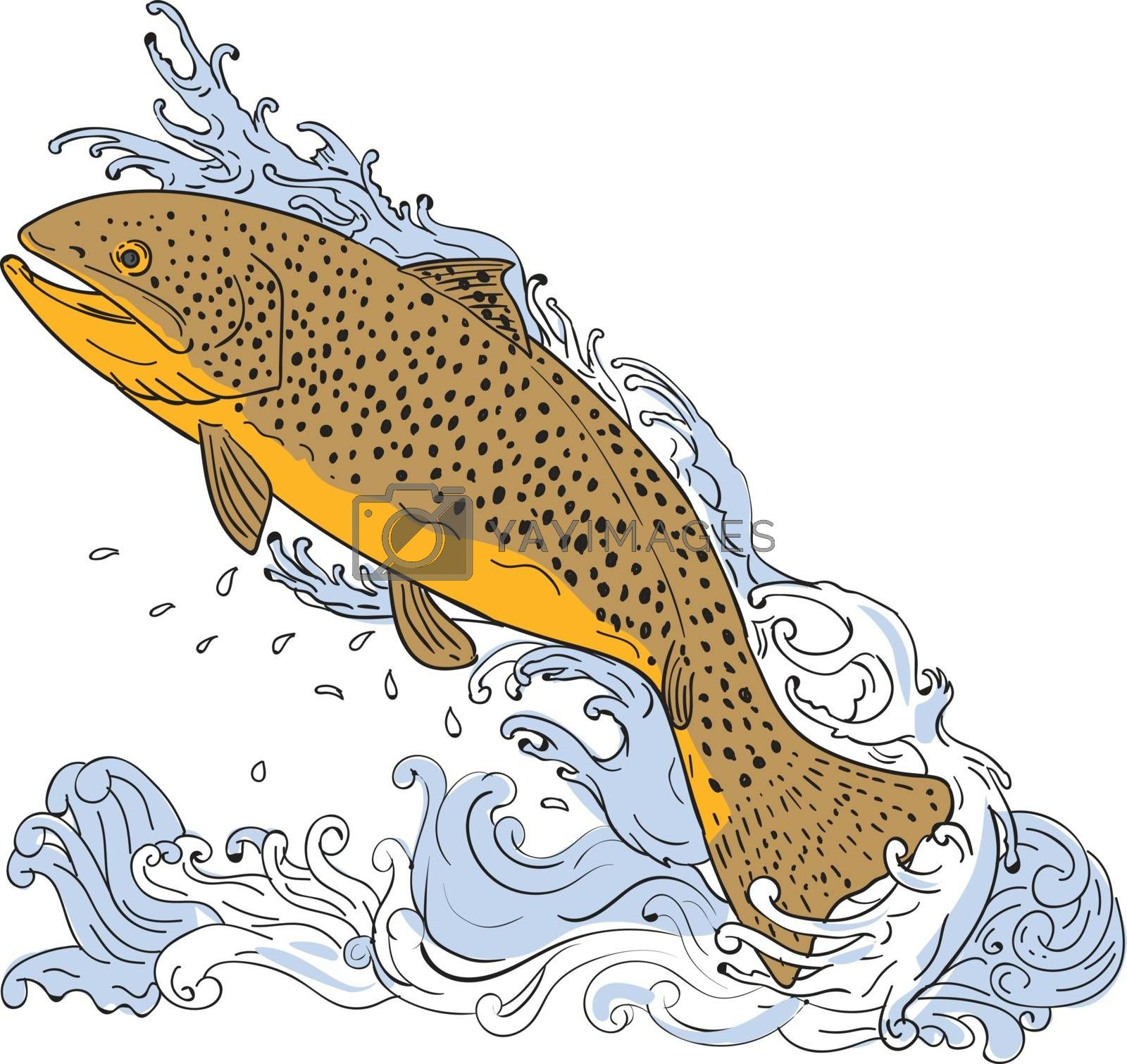 Drawing sketch style illustration of a brown trout fish swimming up on a turbulent water viewed from the side set on isolated white background.