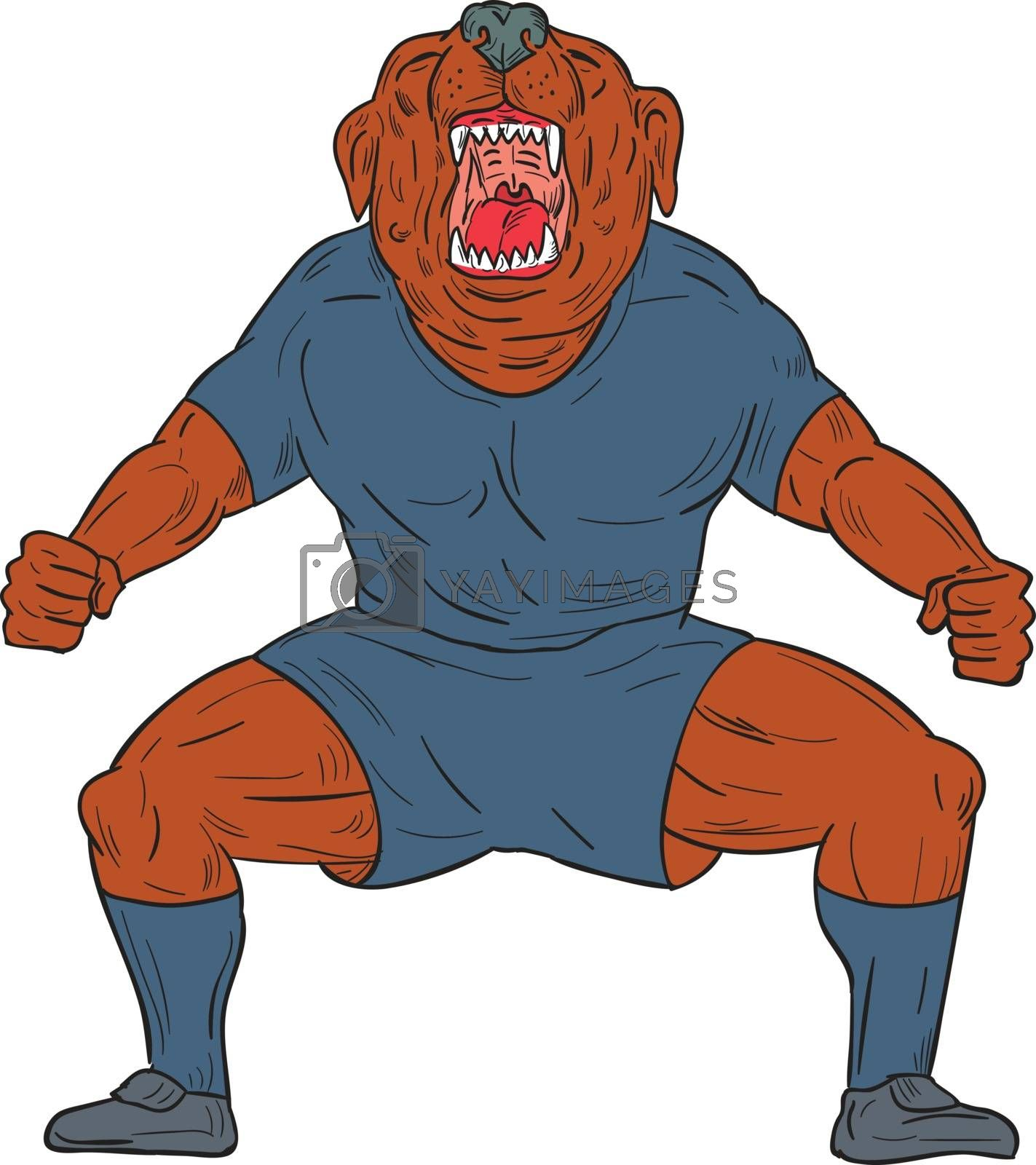 Illustration of a bulldog footballer with knees bent and mouth wide open celebrating haka victory goal viewed from front set on isolated white background done in cartoon style.