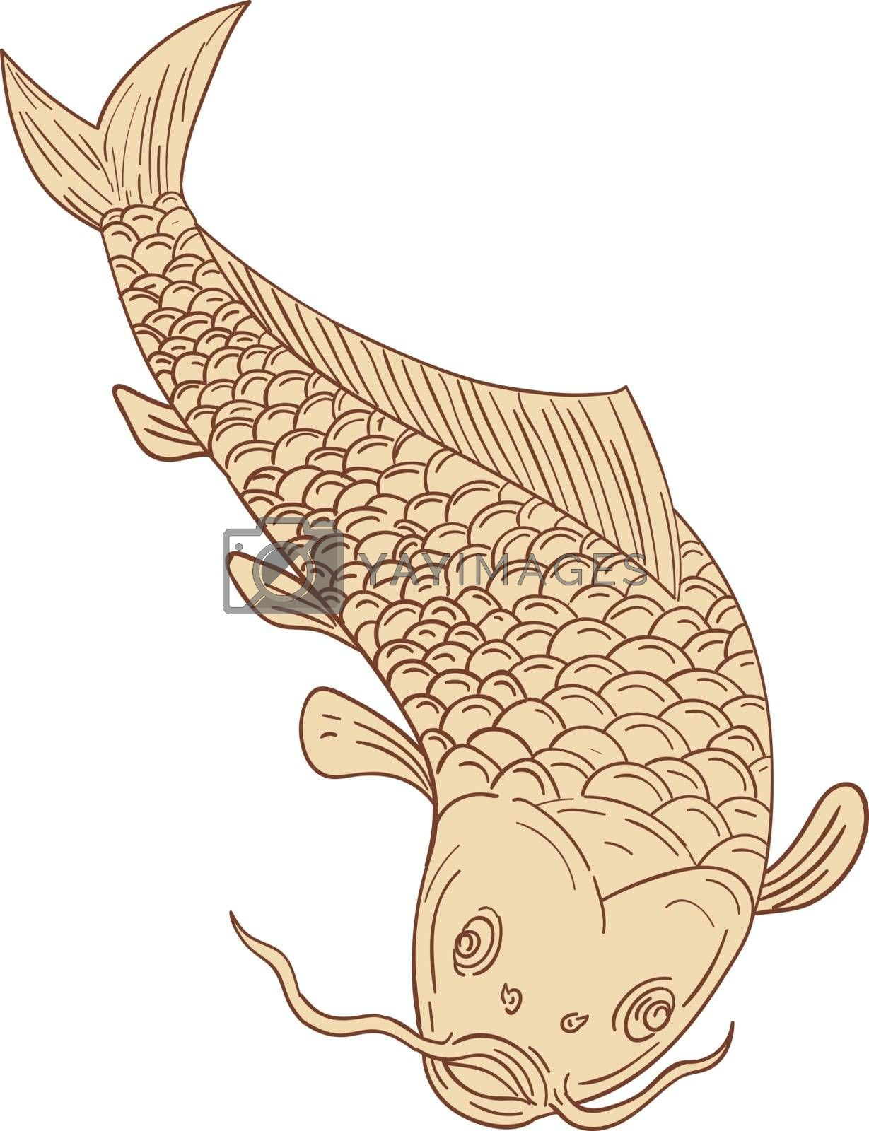 Drawing sketch style illustration of a trout fish diving down viewed from the front set on isolated white background.