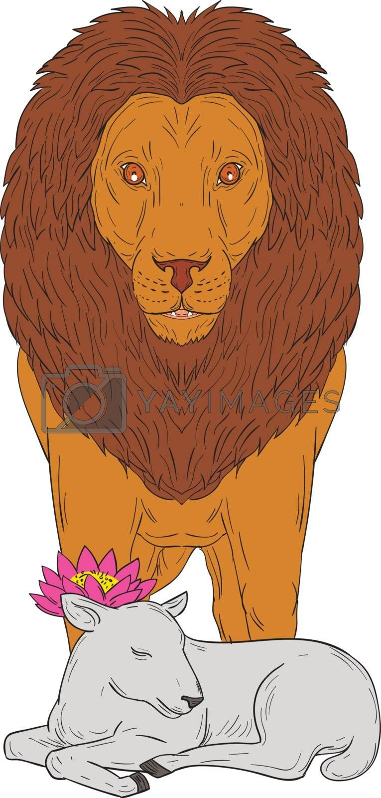 Lion Standing Over Lamb Lotus Flower Drawing by patrimonio