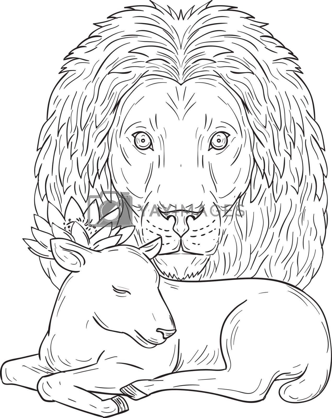 Lion Watching Over Sleeping Lamb Drawing by patrimonio
