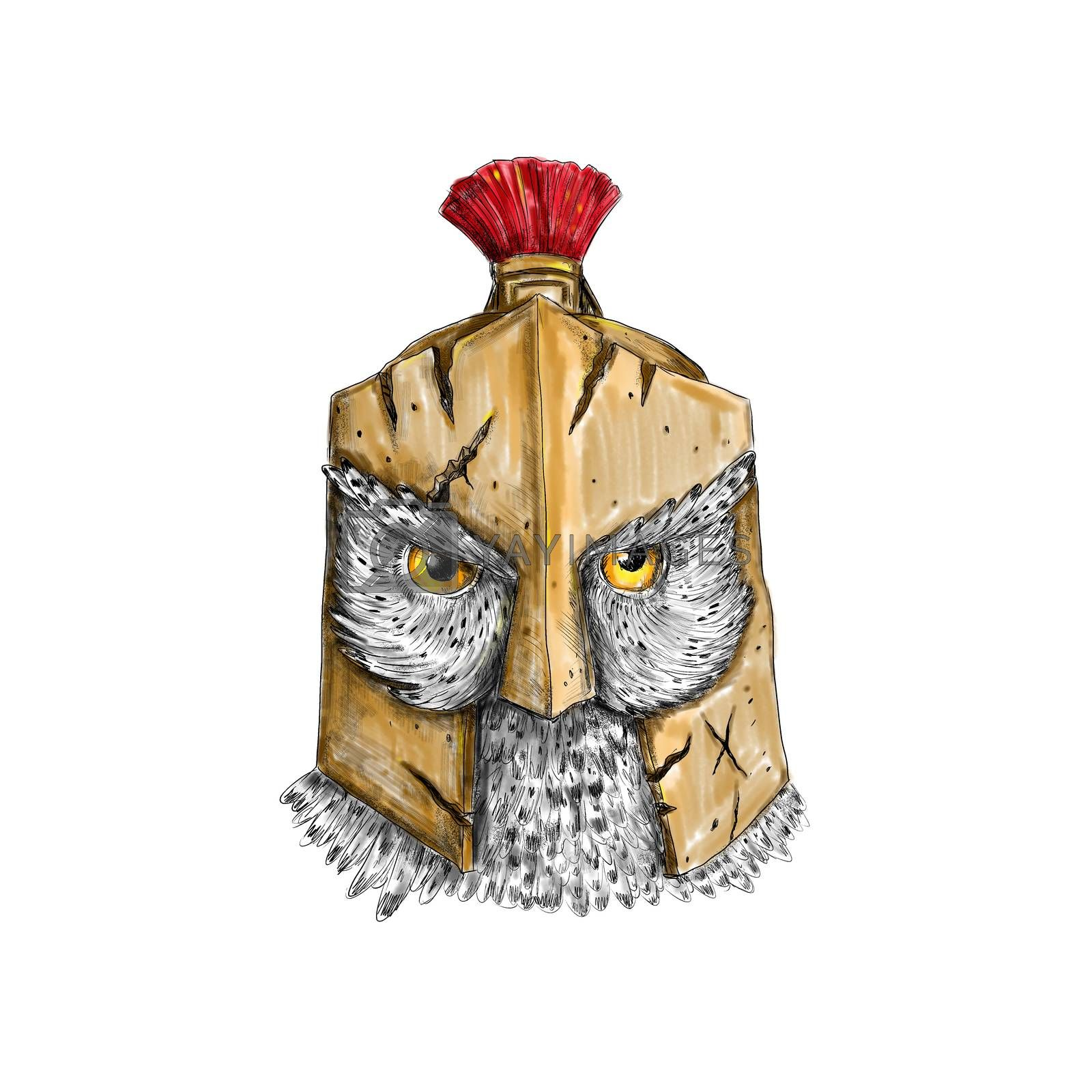 Tattoo style illustration of an owl wearing a spartan helmet viewed from front.