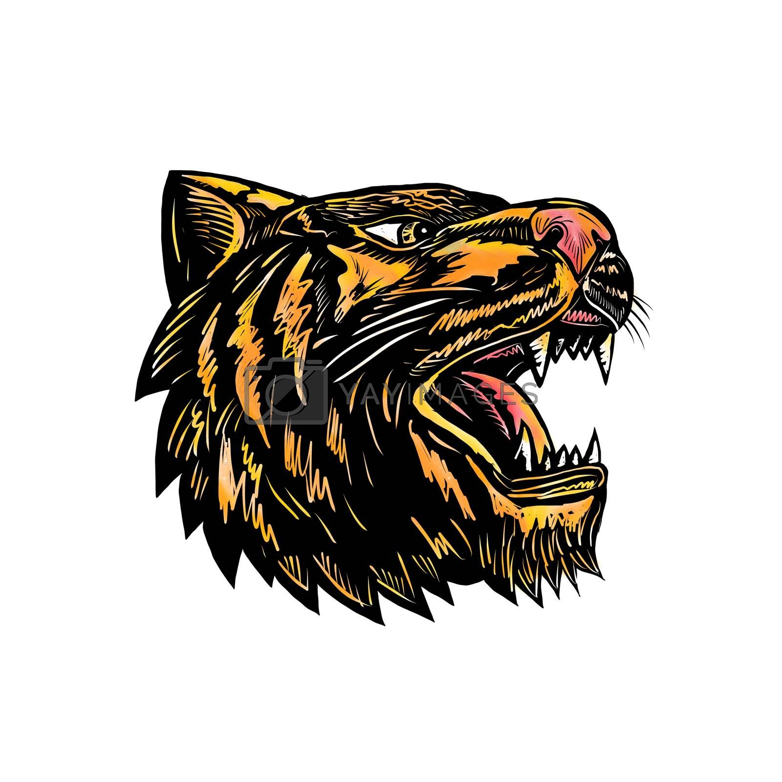 Woodcut style illustration of an angry growling tiger head viewed from side on isolated background.