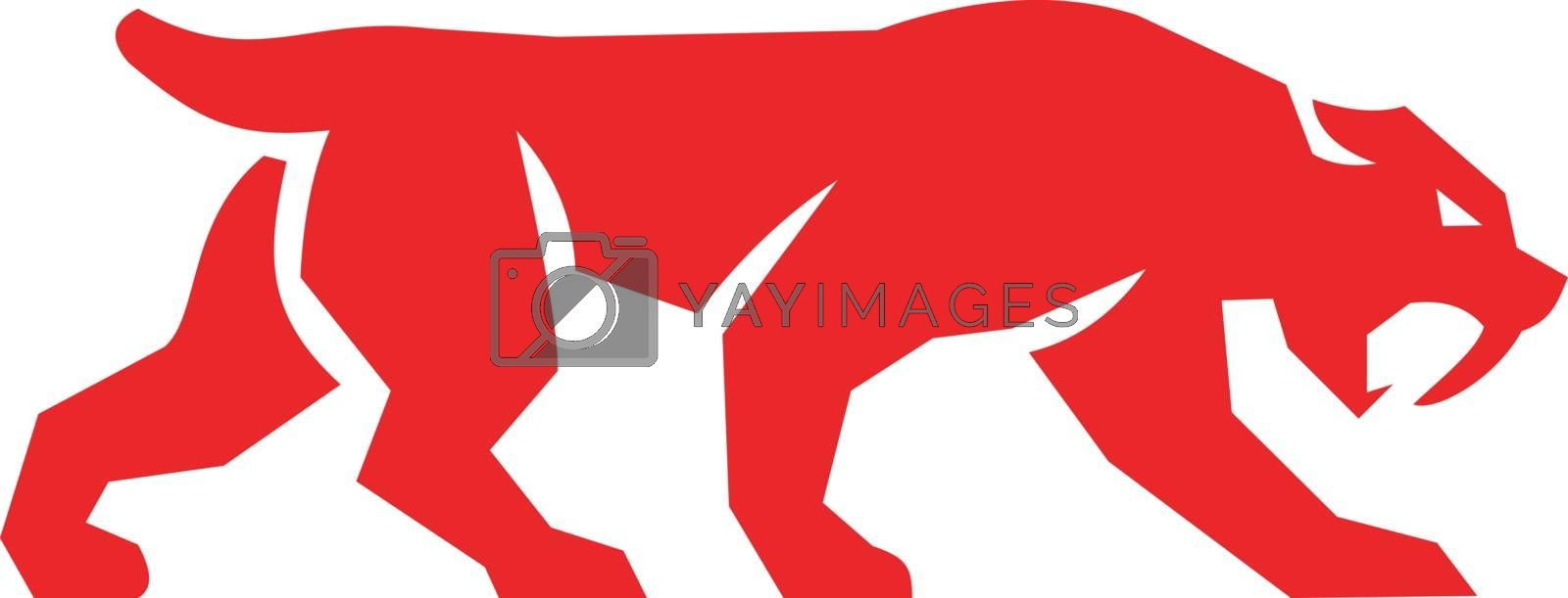 Illustration of a saber tooth tiger or sabre-tooth cat with long, curved saber-shaped canine teeth of which the best known genera is Smilodon silhouette walking viewed from the side set on isolated white background done in retro style.