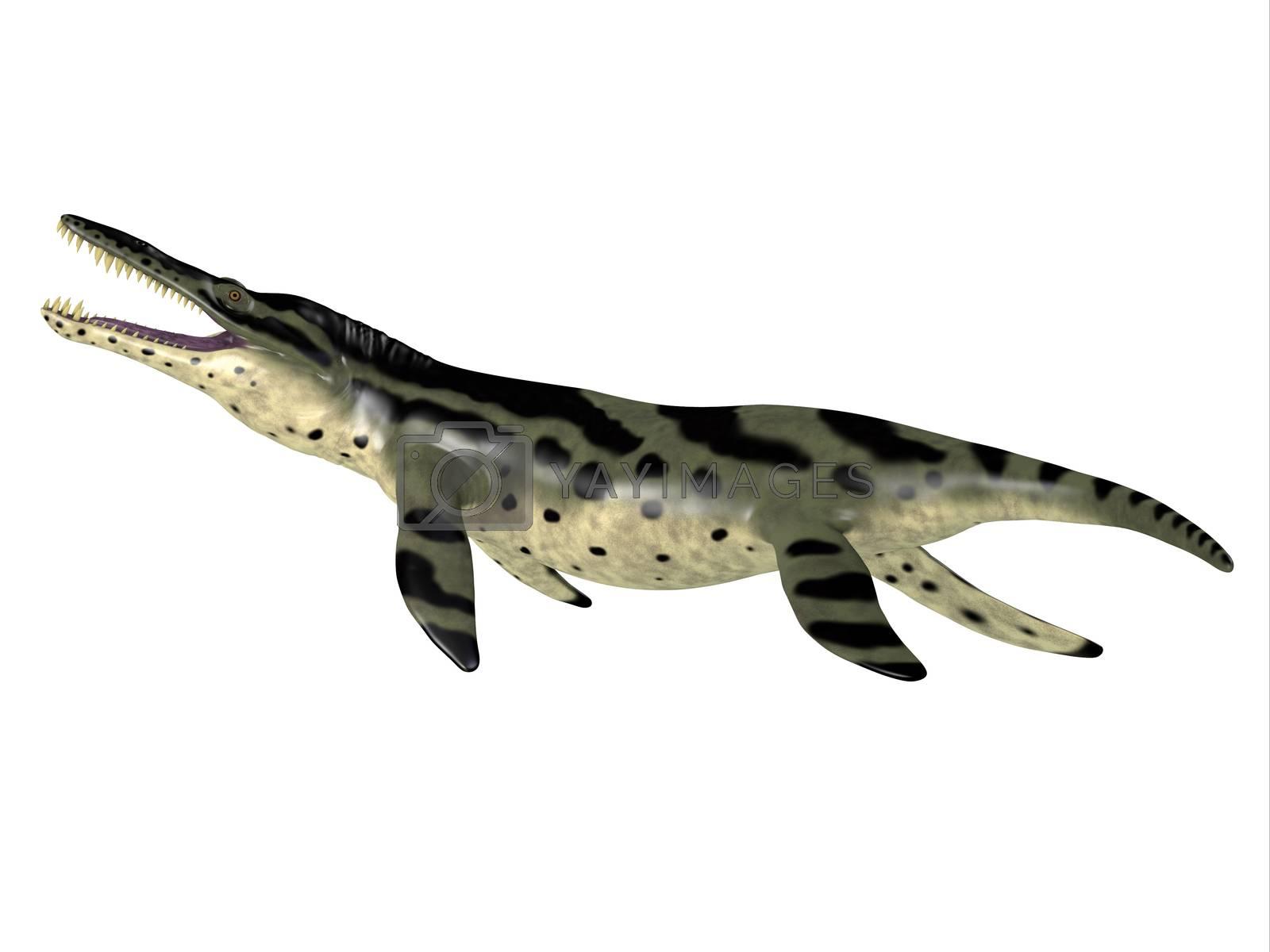 The carnivorous marine reptile Kronosaurus lived in the seas of Australia during the Cretaceous Period.