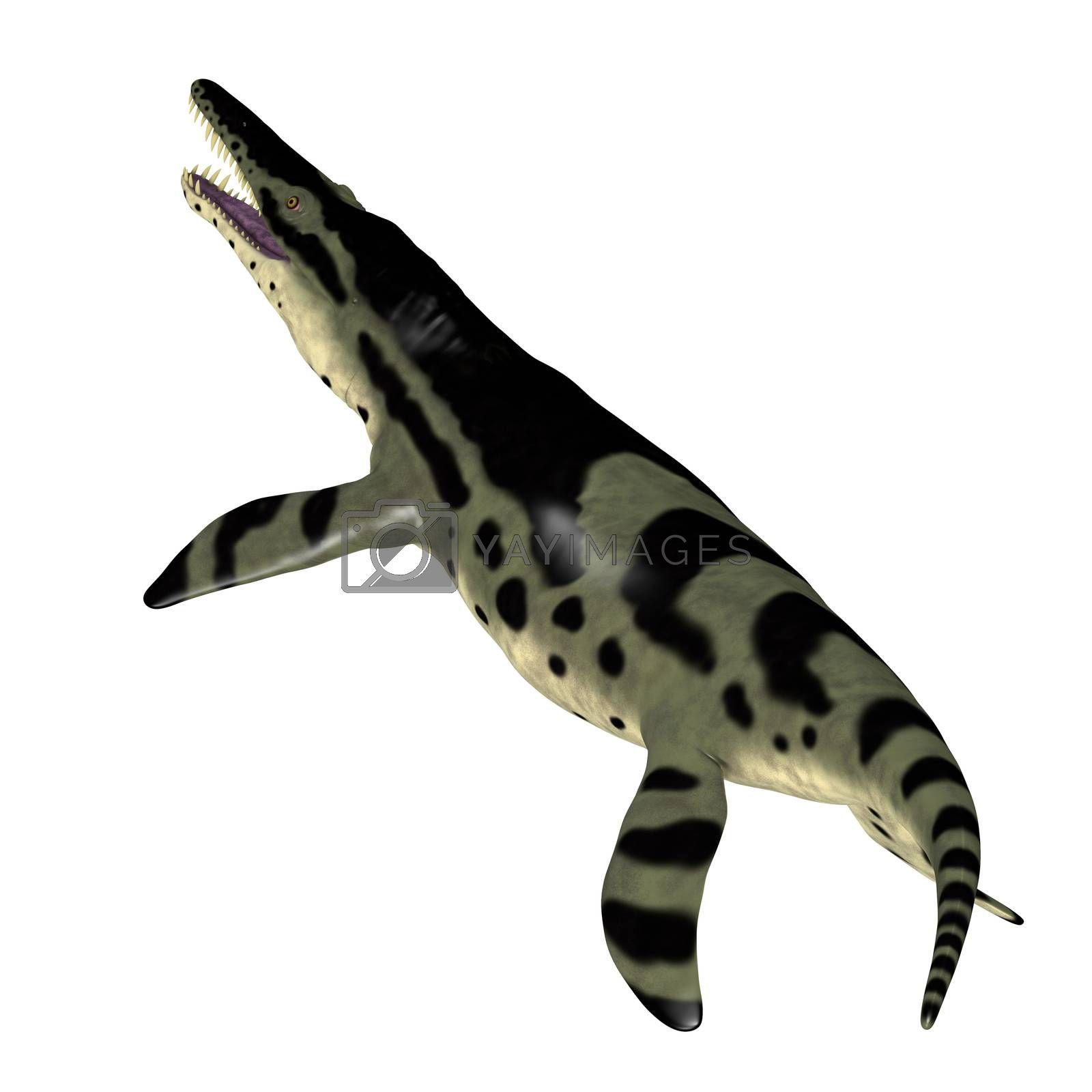 The carnivorous marine reptile Kronosaurus lived in the seas of Australia during the Cretaceous Period.
