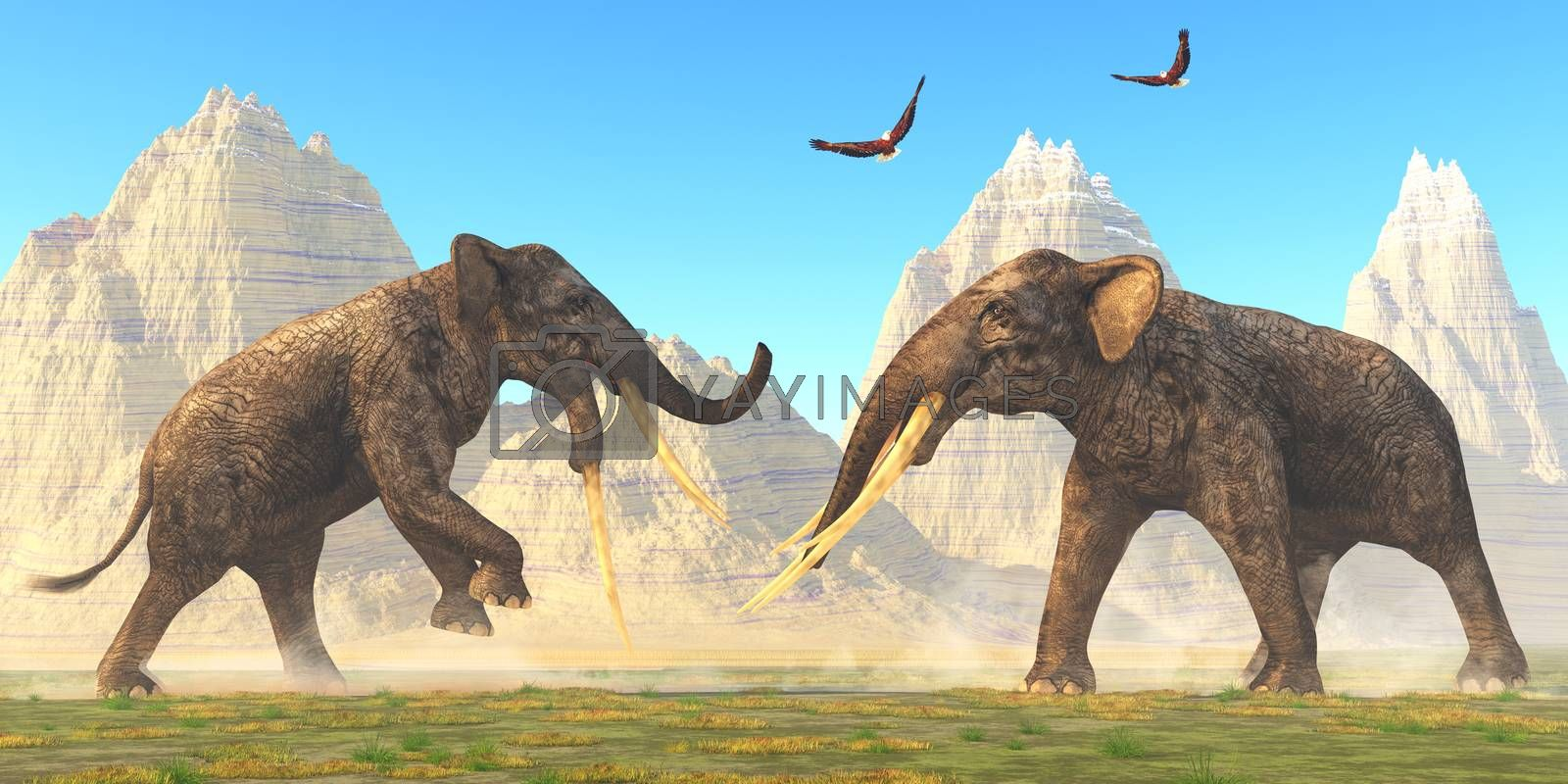 Two bull Stegotetrabelodon fight each other for mating rights in the herd during the Miocene Period.