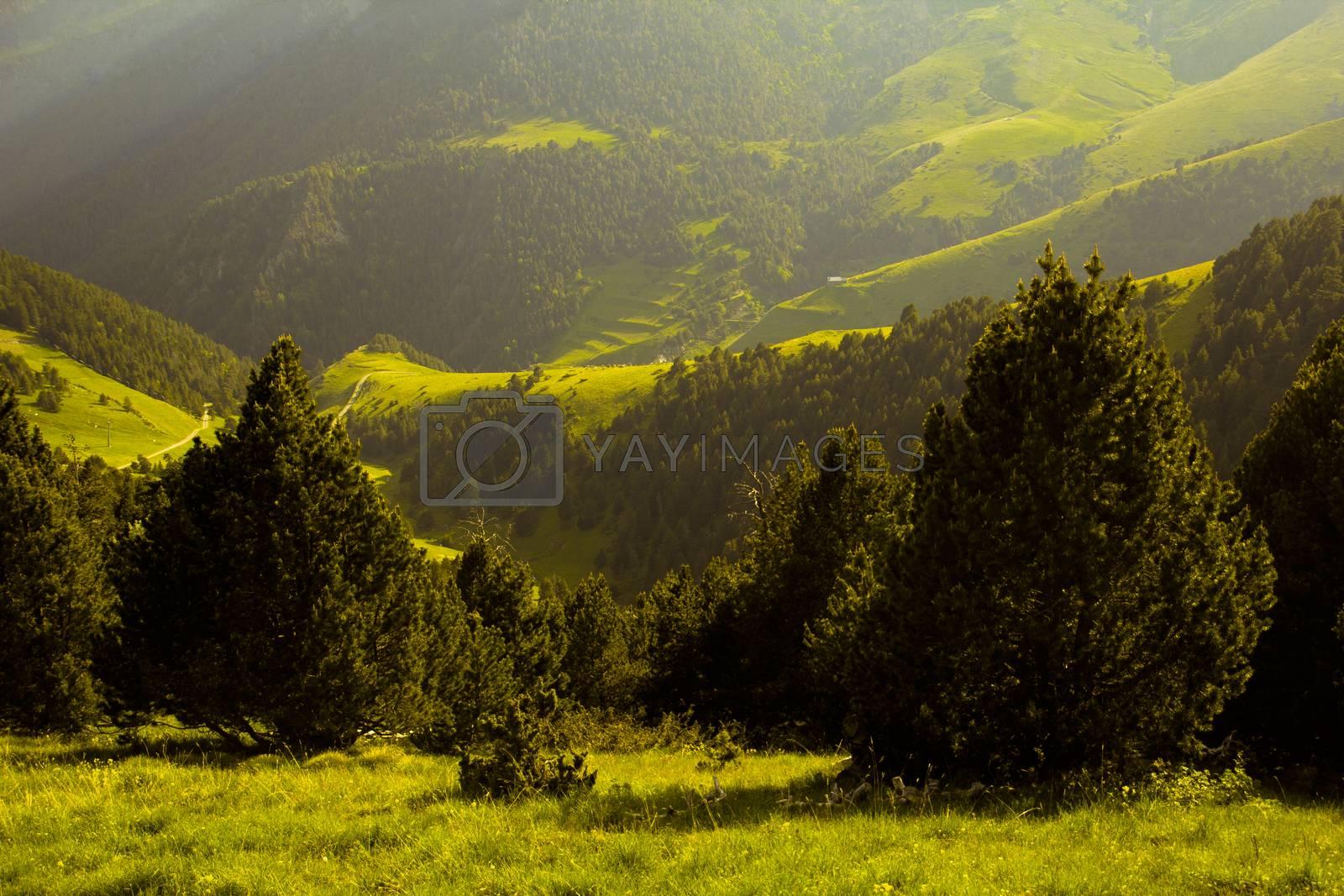 Meadows between Seturia forest in Andorra, Pyrenees