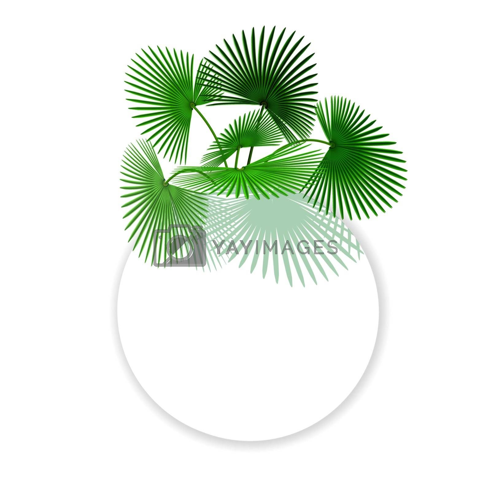 Green tropical leaves Palm In a circle place for Ads, Advertising. Vector illustration