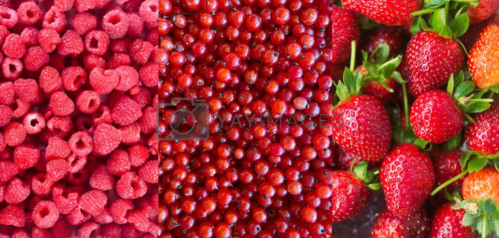 Collection of varios Ripe juicy red berries currant, raspberry and strawberry background. Natural food berries. Healthy food organic concept.