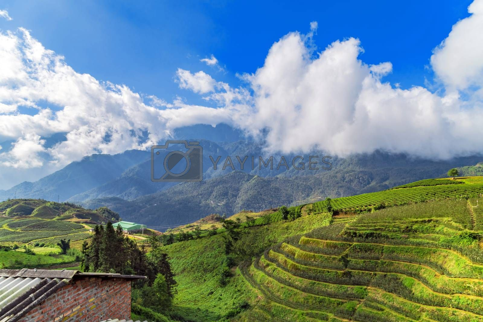 Vietnam mountain landscapes Rice fields on terraced